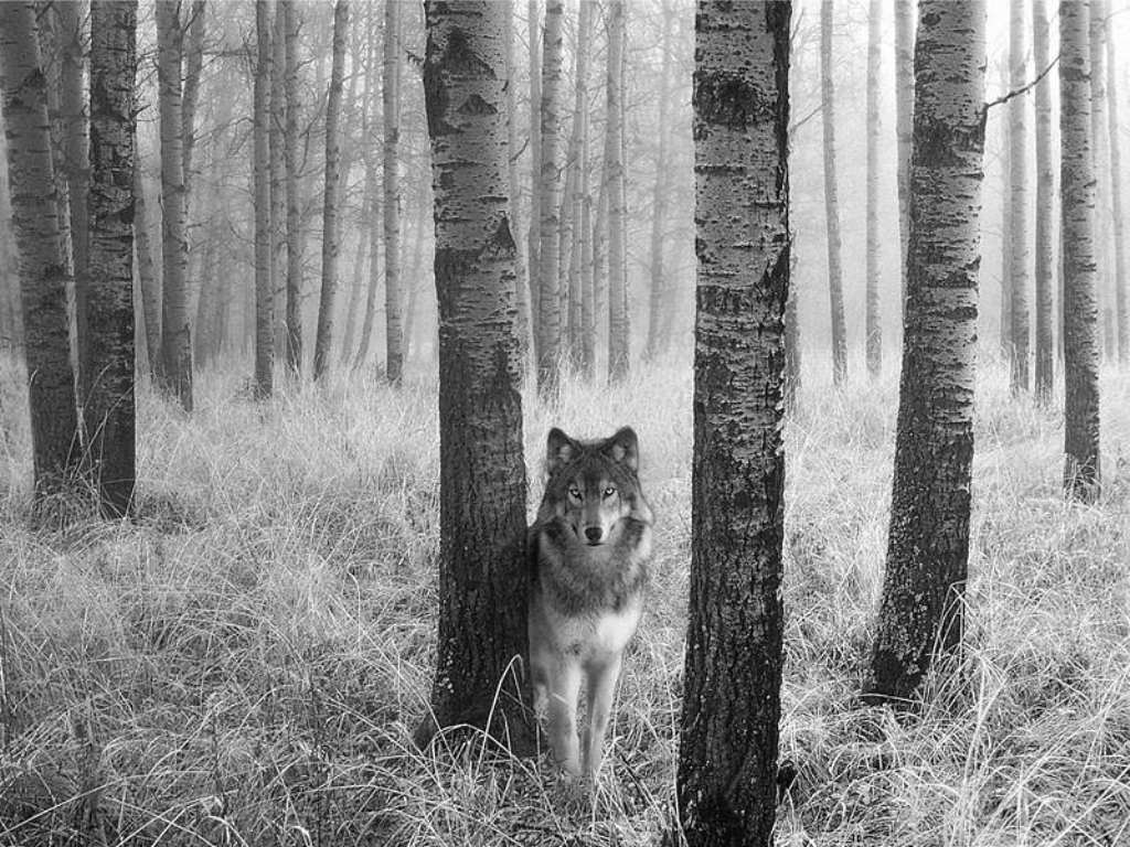 Картинки лес с животными черно белый