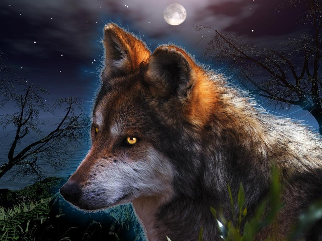 Картинки на телефон волчица