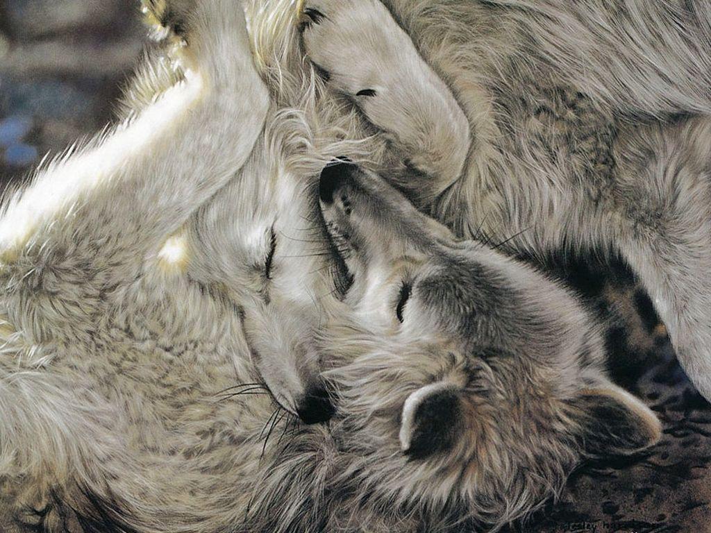 волчица и волк нежность картинки сегодня животное