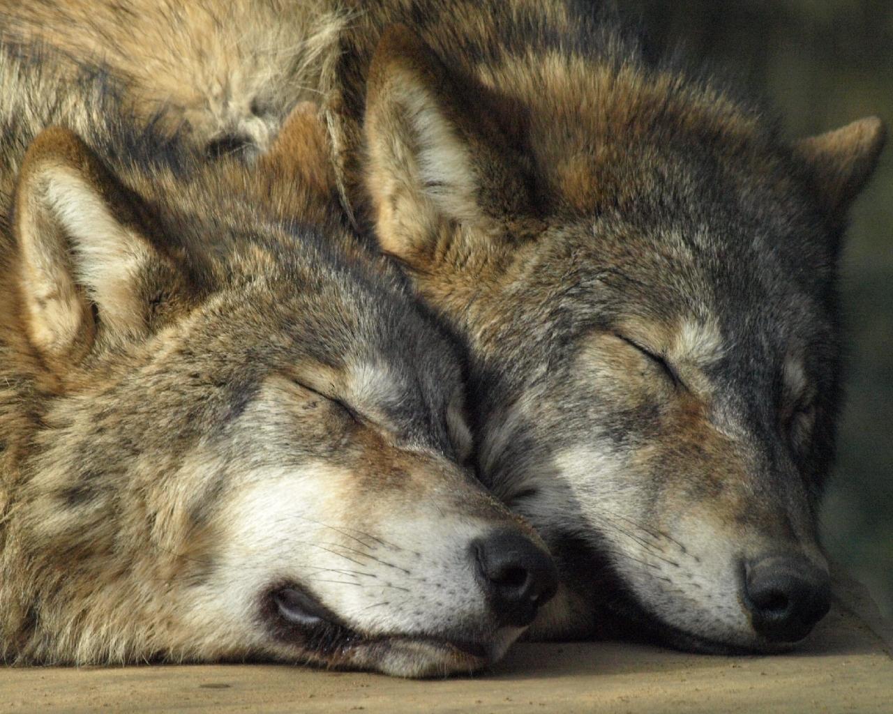 прост картинки про пары волков торты ягодами клубникой