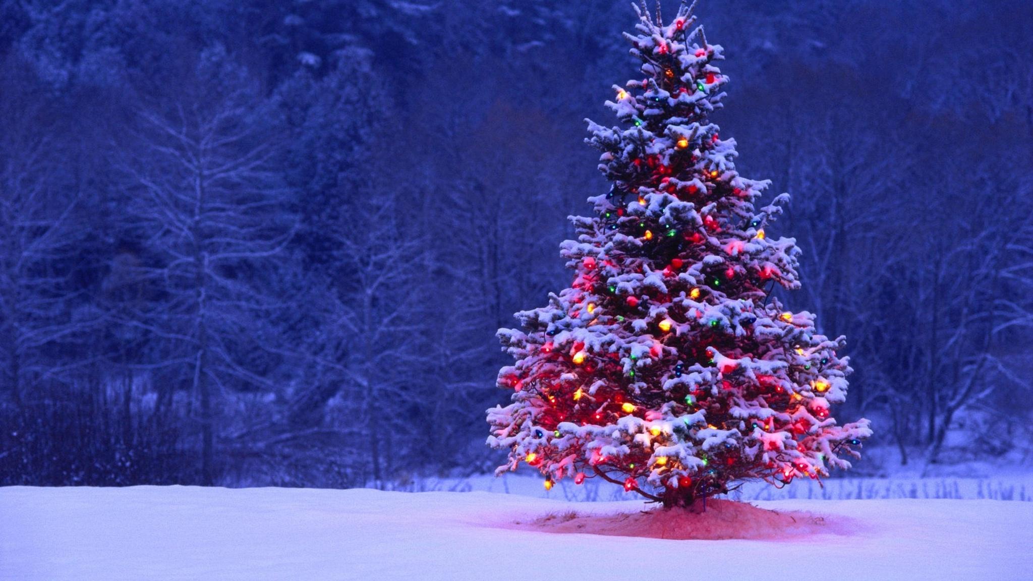 фото новогодних елок высокого качества прайма просторах