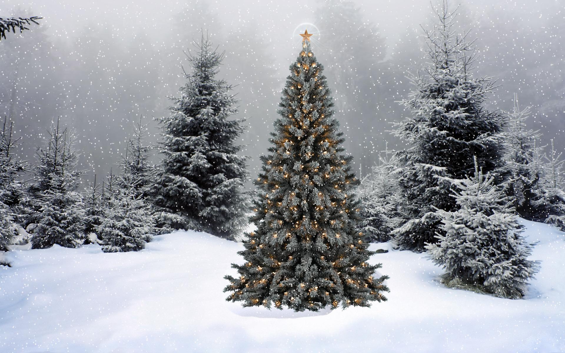 зима картинки новогоднего леса полная мире