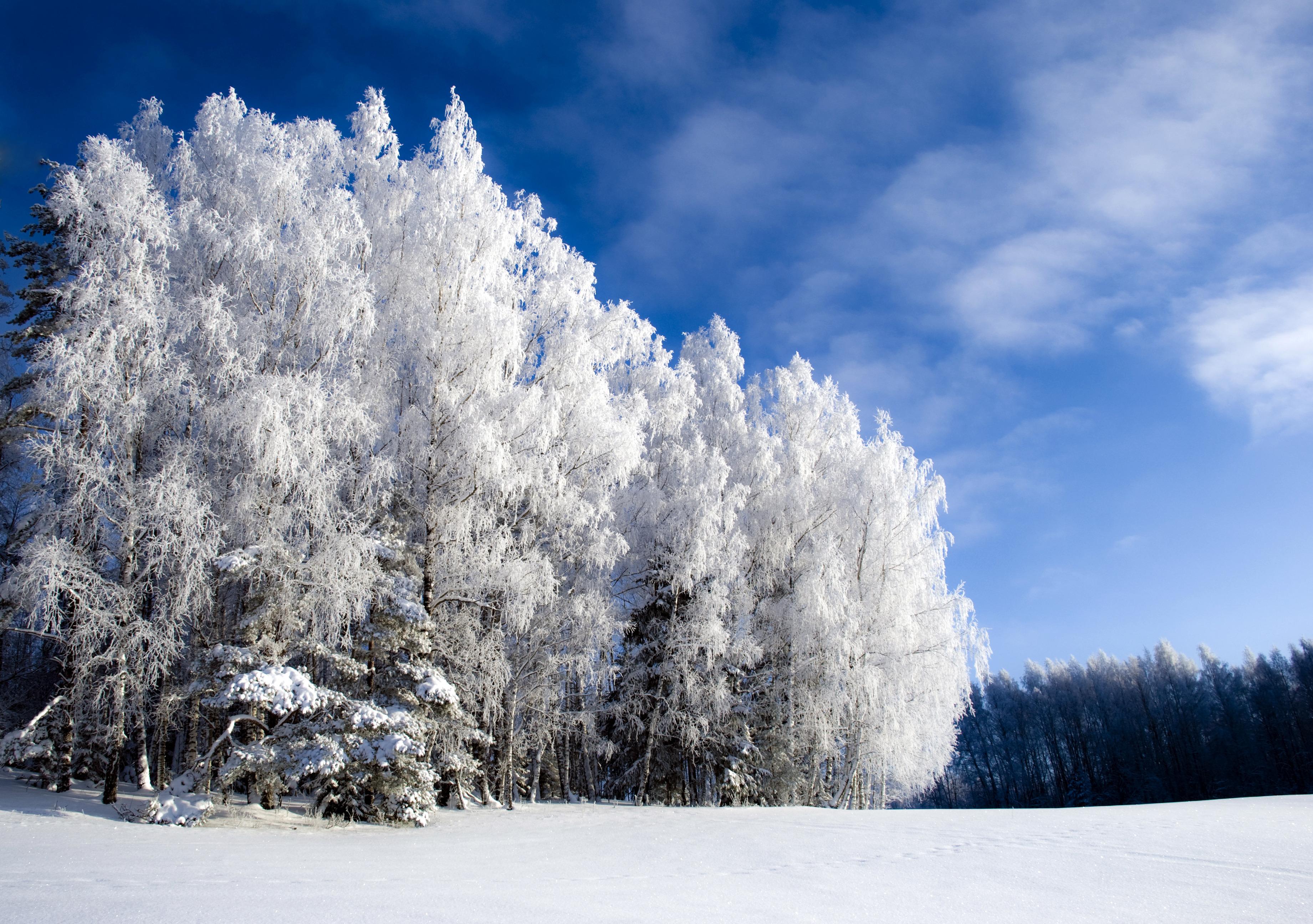 того чтобы зима в россии картинки на телефон этом, семья