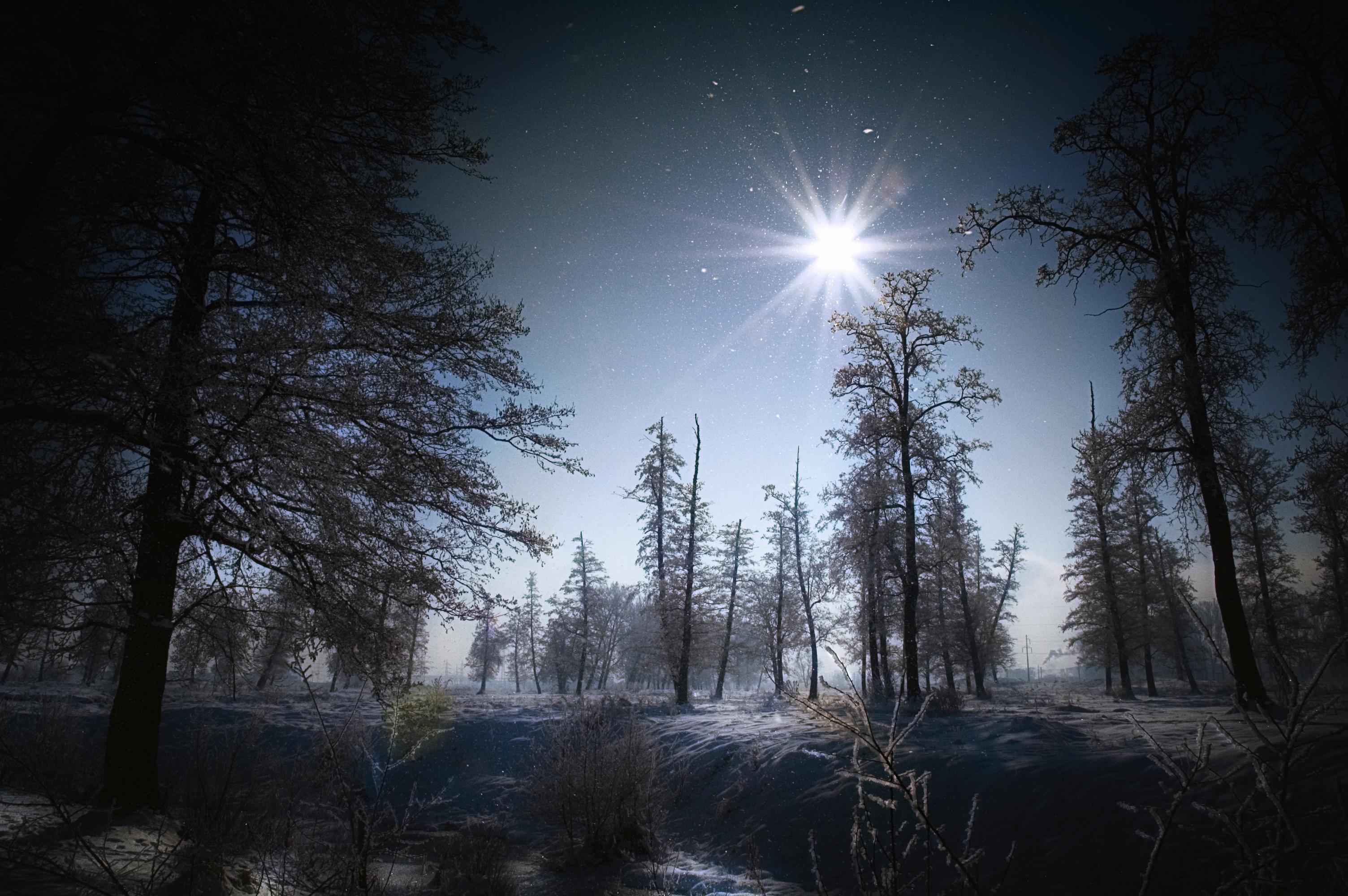 красивые картинки зимний лес ночью кого-то это