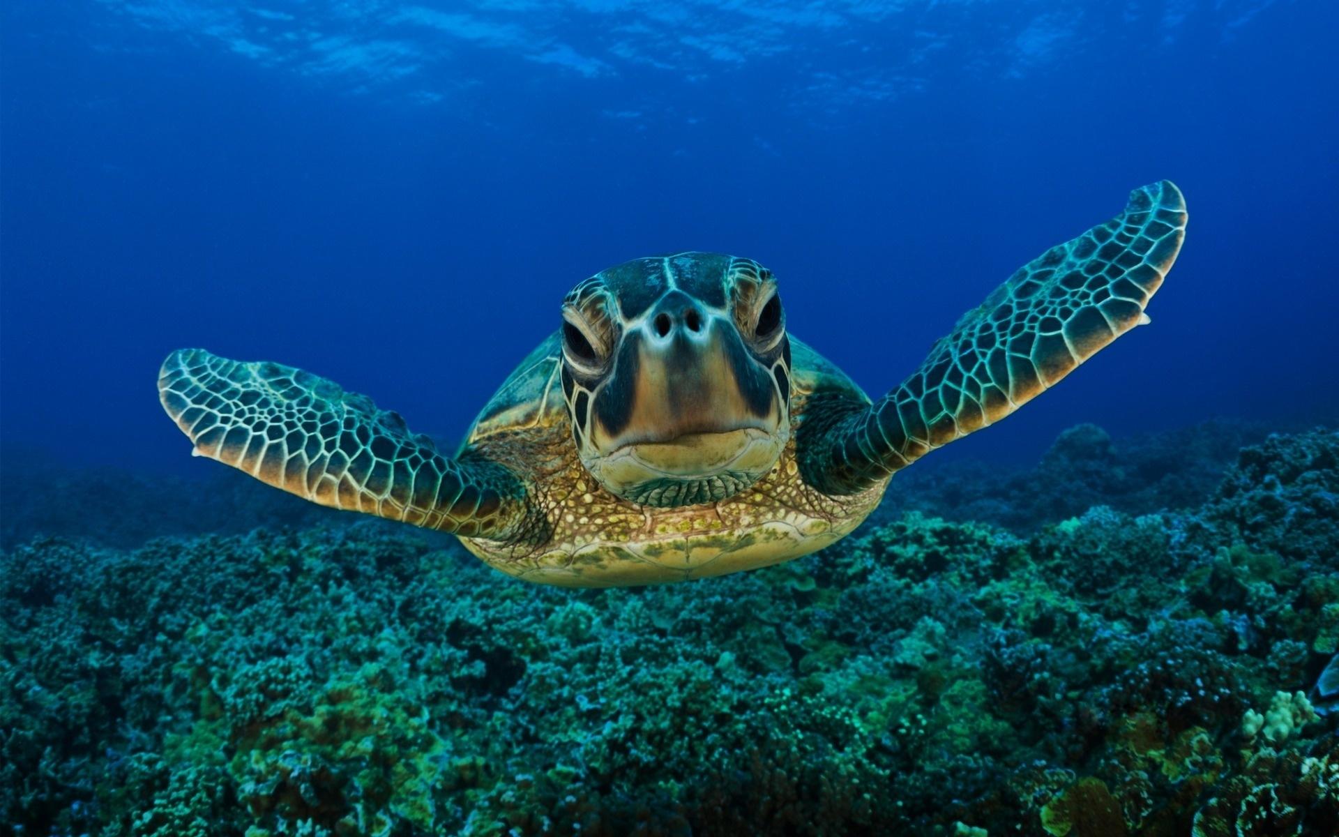 правило апреле морская черепаха картинки на рабочий колориметр это