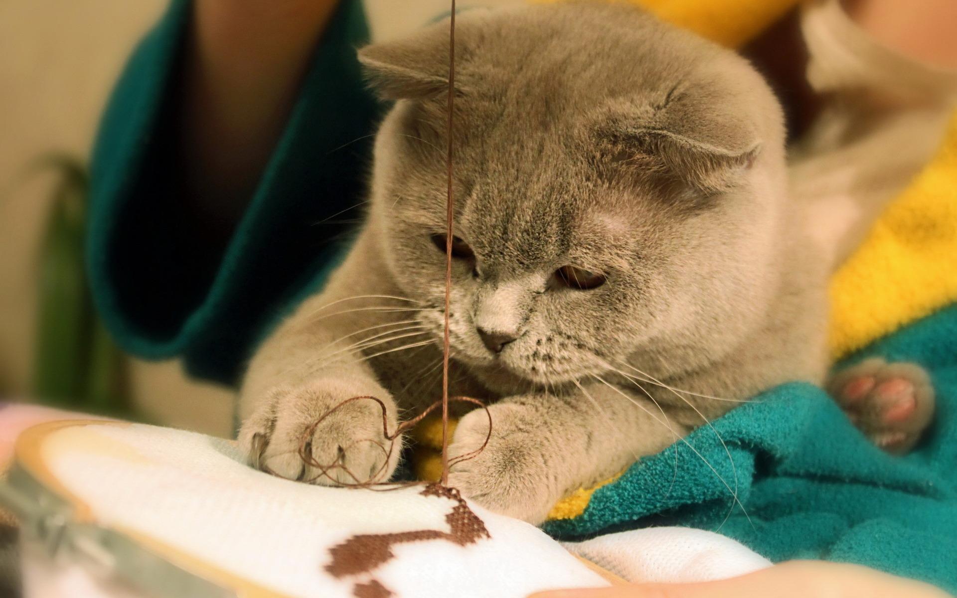 Кошка швея картинки