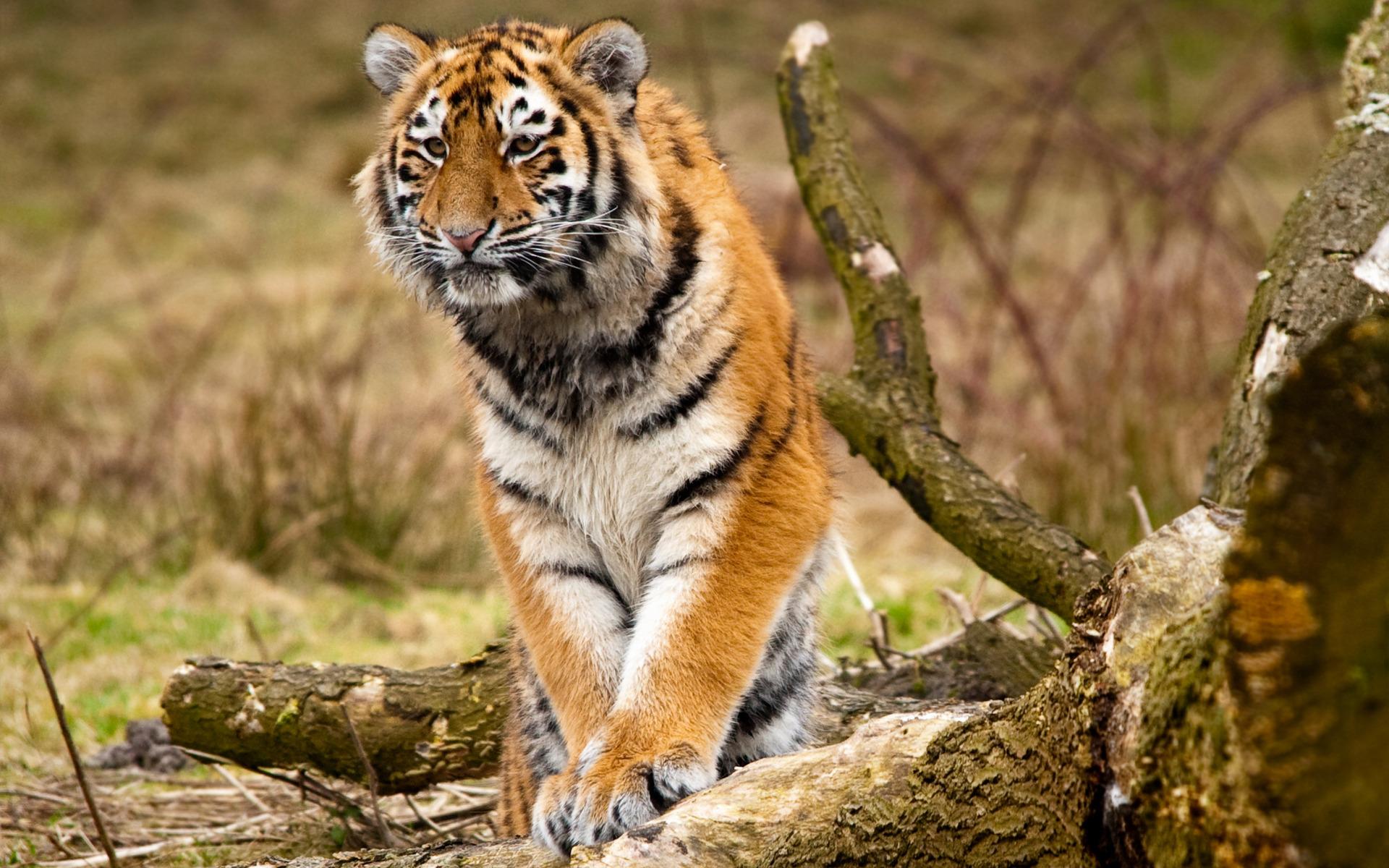Смотреть красивые картинки животных природы