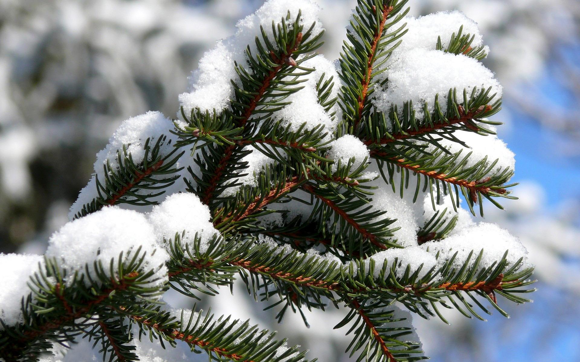 этом картинки на рабочий стол снег на елках чем