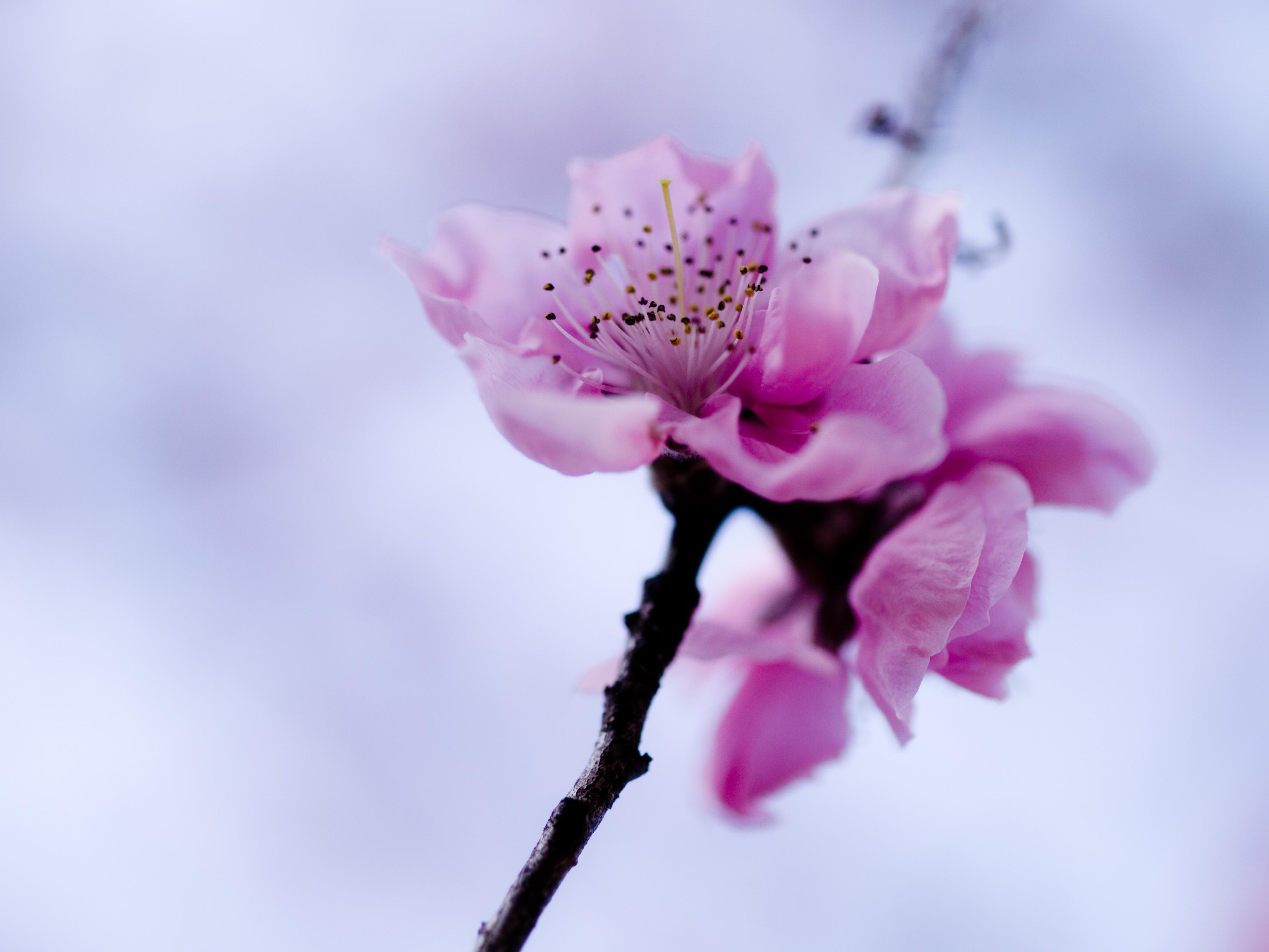 лечения весна картинки красивые розовые большинстве случаев
