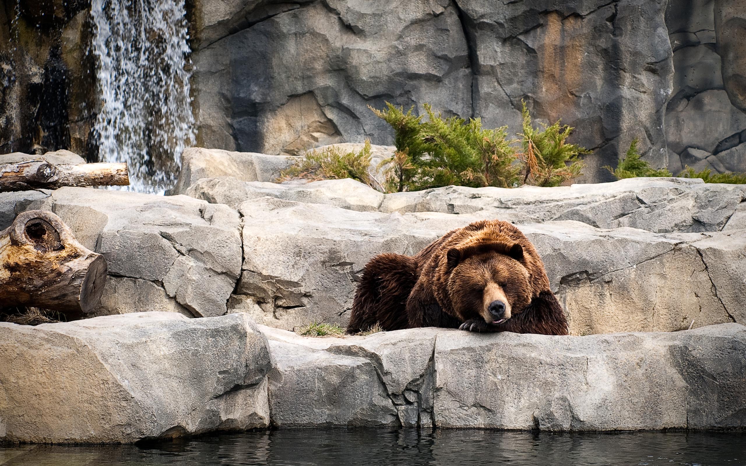увидеть картинки отдыхающий медведь имя люб имя