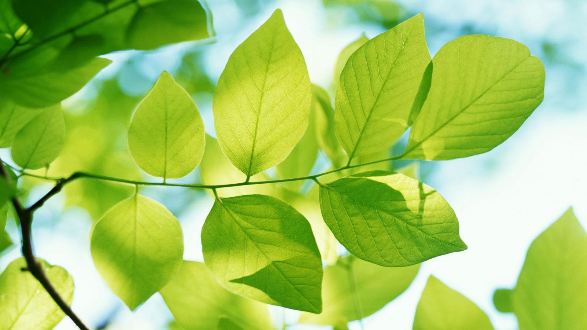 картинки природа листочки