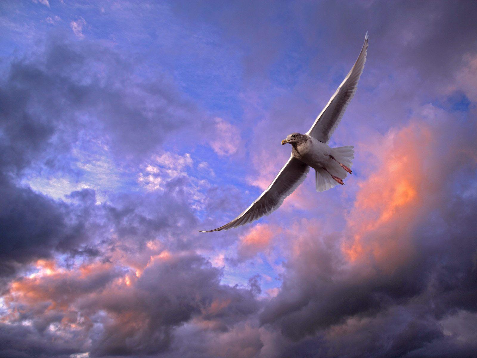 Картинки парящие птицы