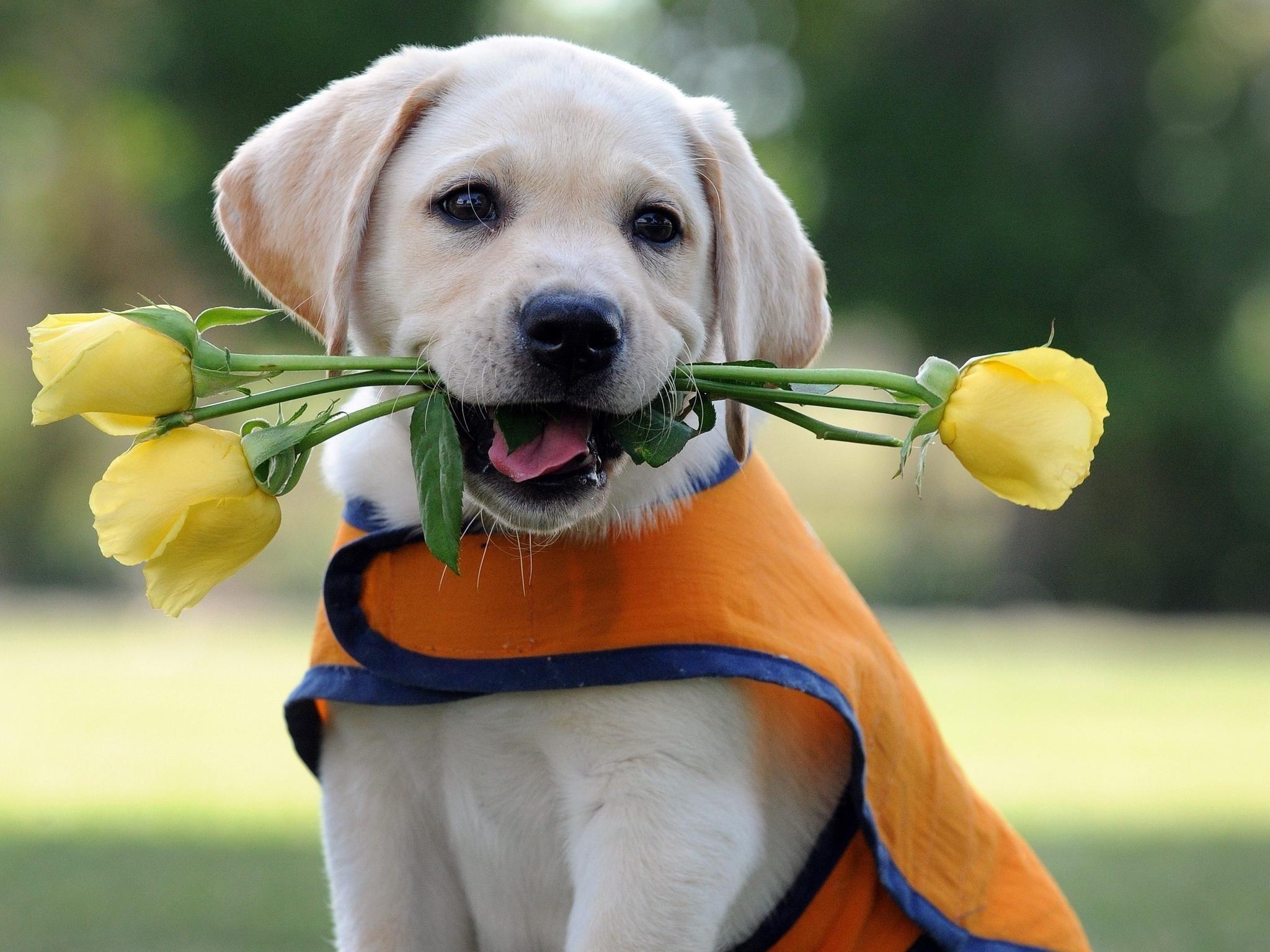 с днем рождения картинки цветы и собаки