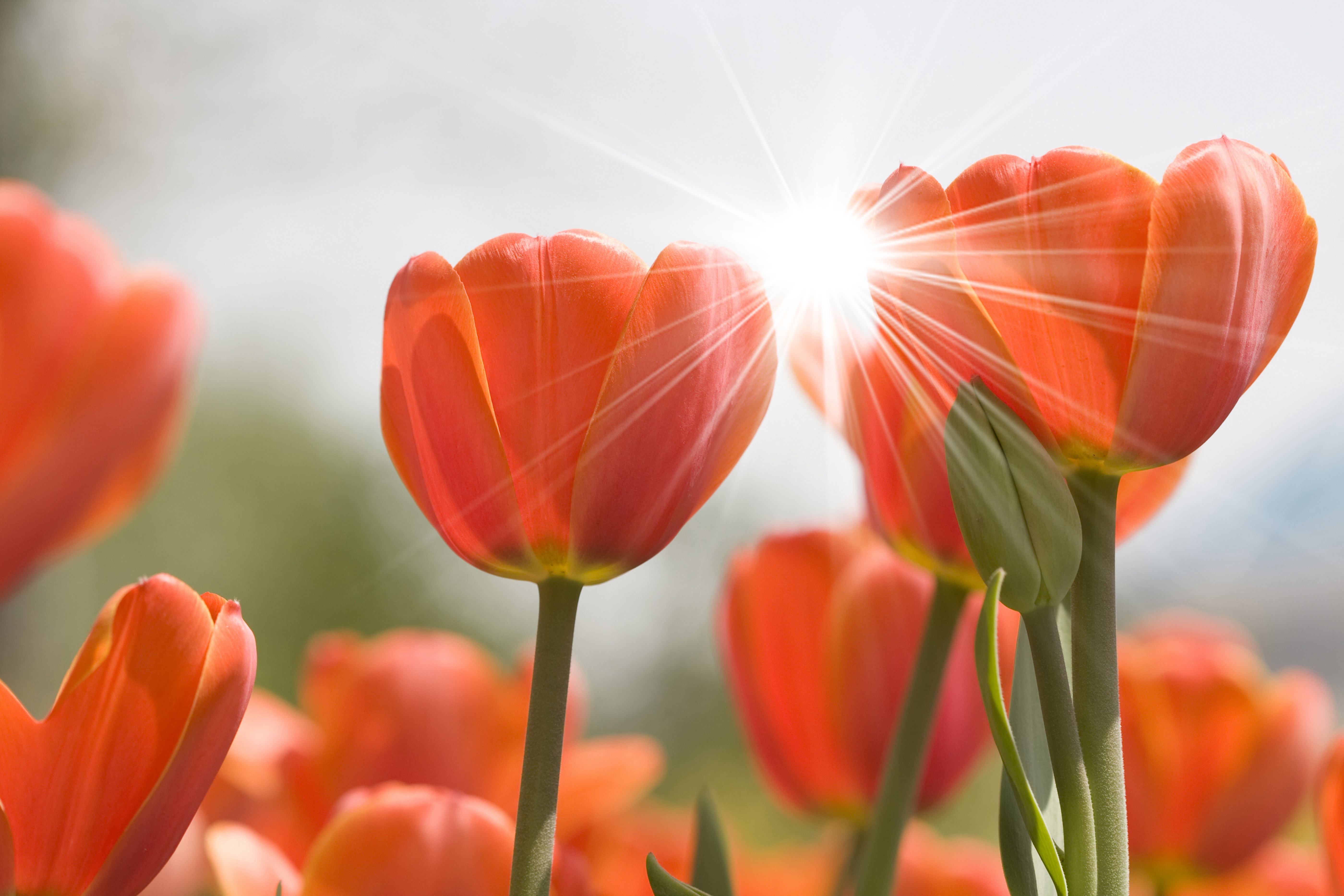большей красивые картинки яркие солнечные весна городского голубя горлица