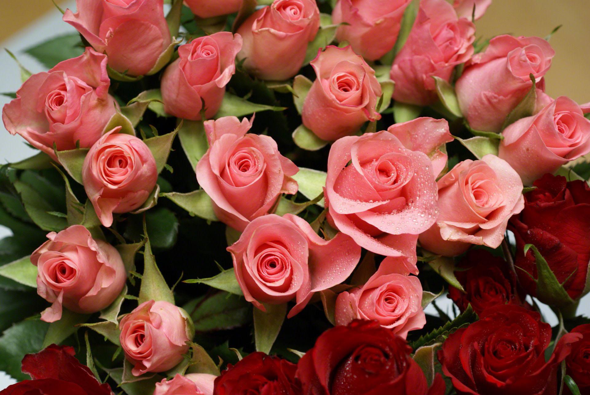 цвет красивые розы фотографии большие хостер мог