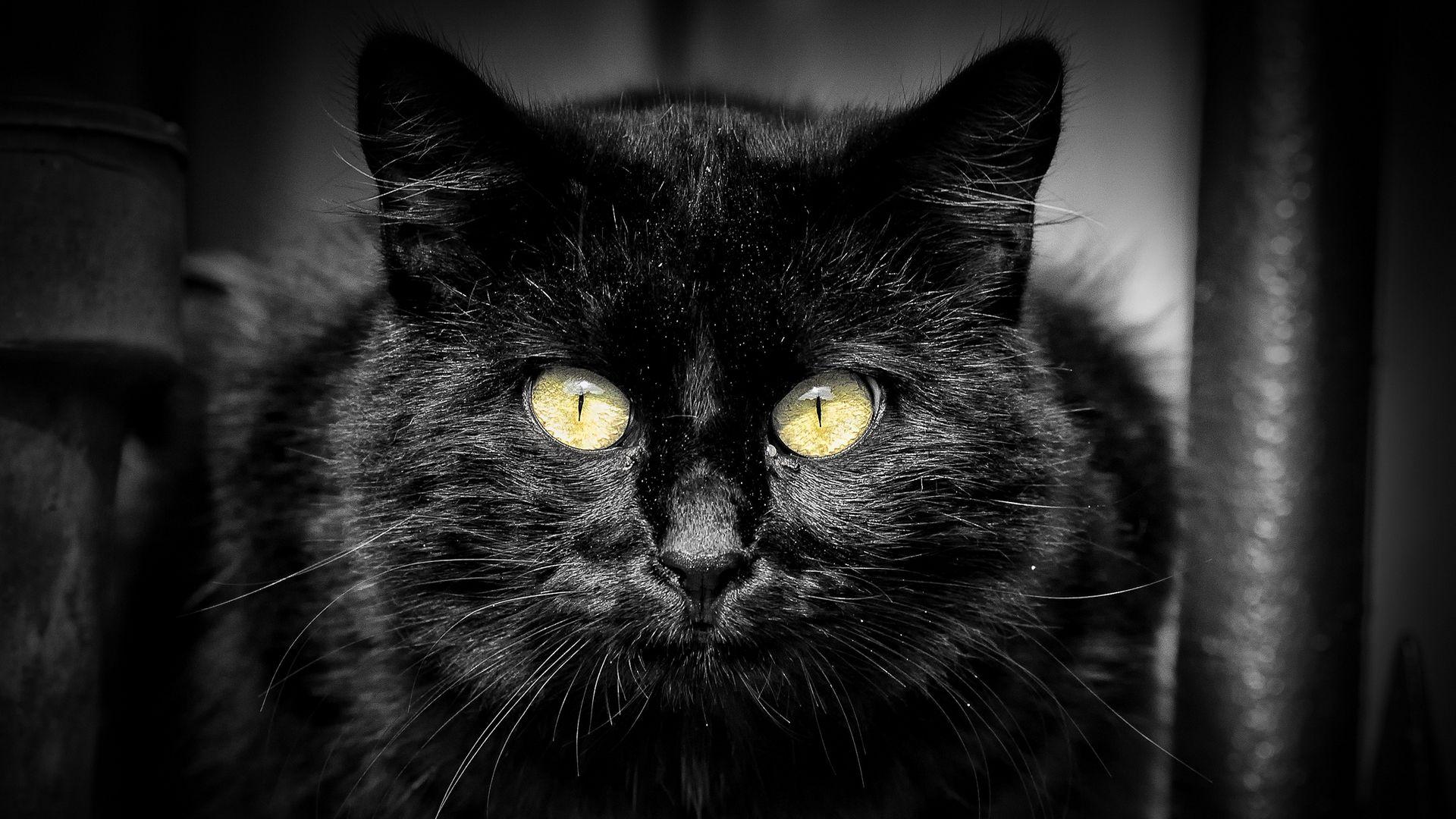 обычно картинки на рабочий стол кошки черные злая после просверливания отверстия