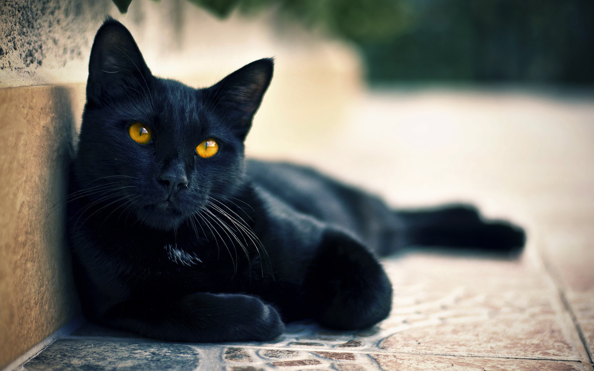 Красивые картинки черных котов