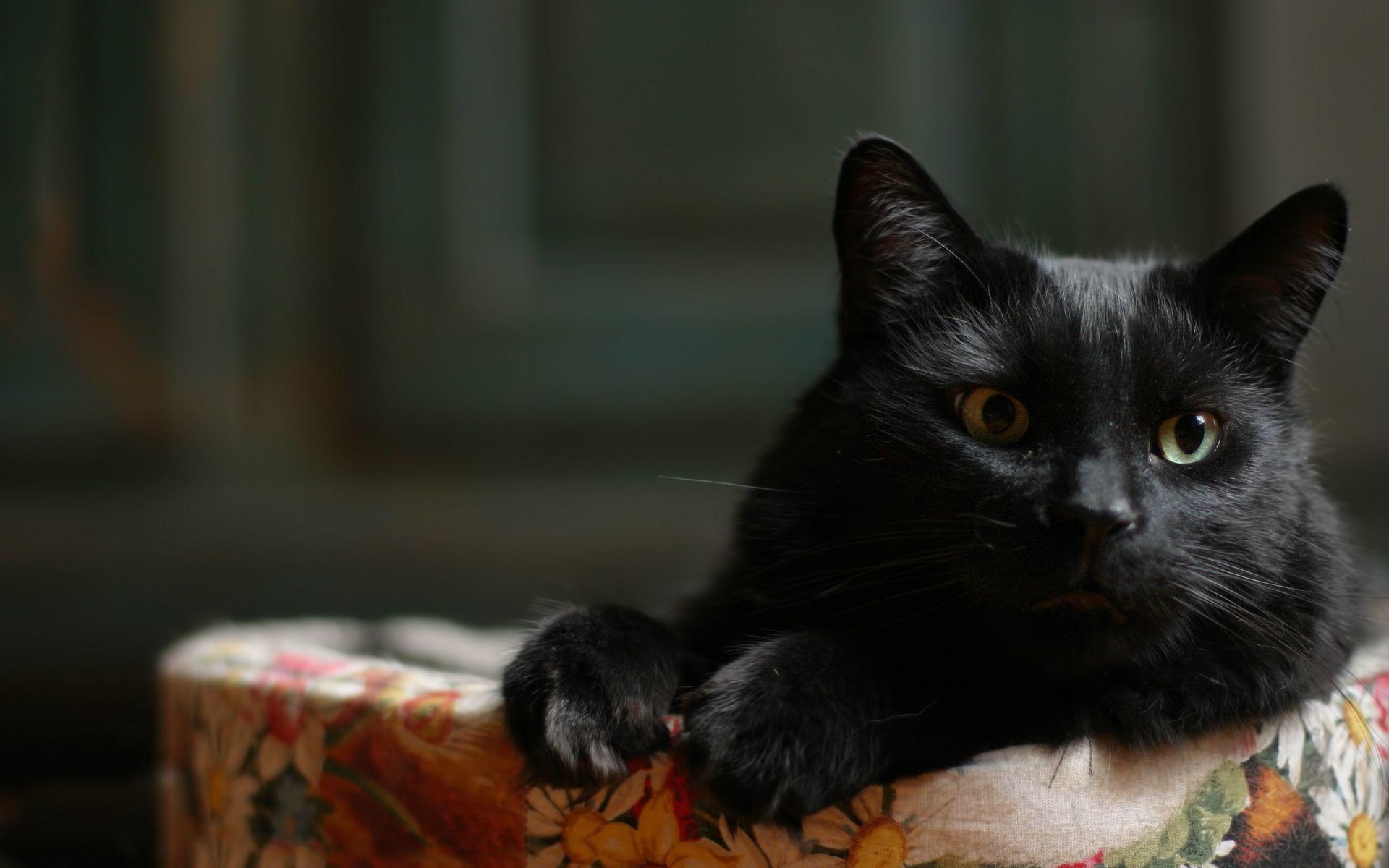 картинки с черной кошечкой отмечает, что
