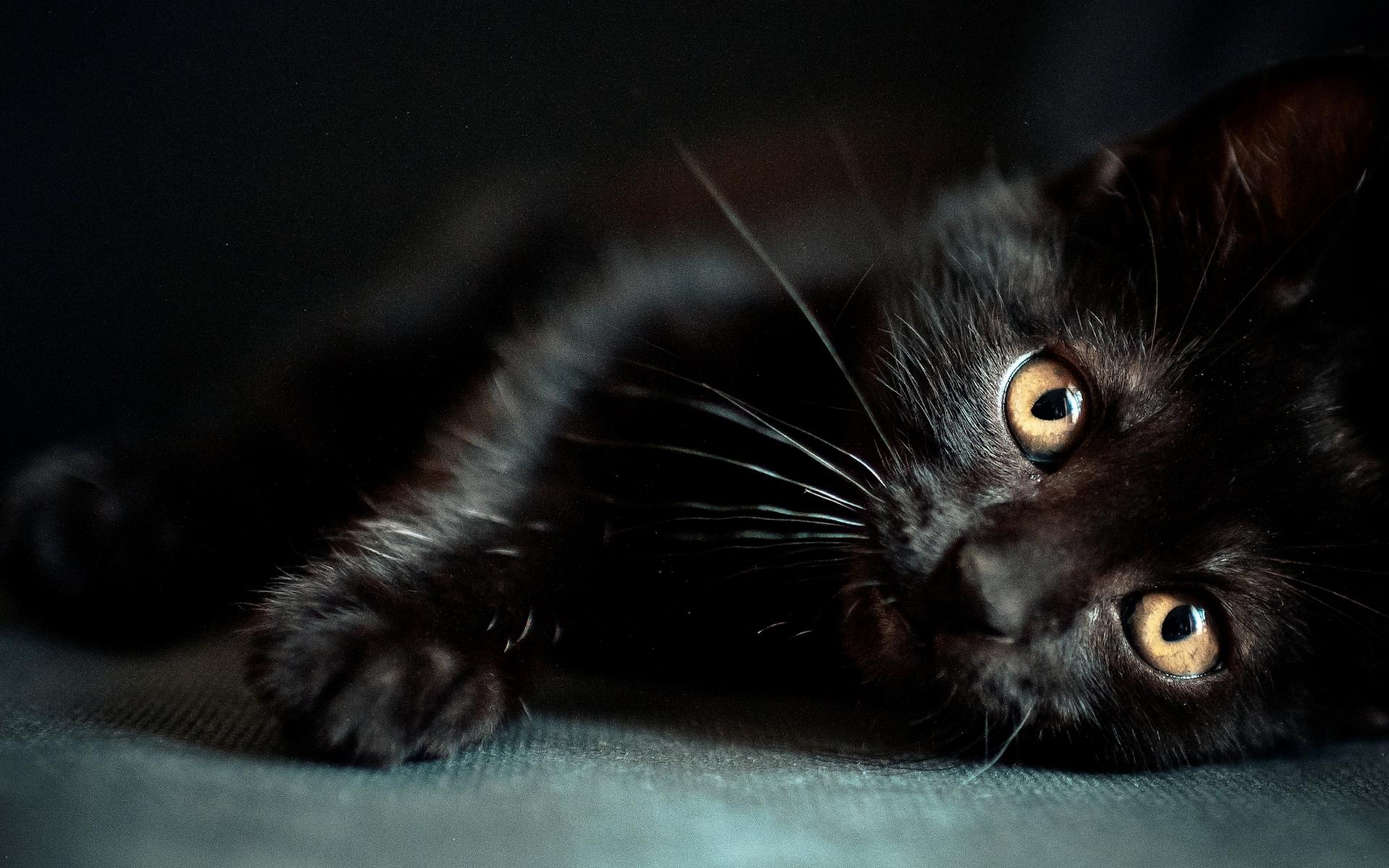 картинки с черной кошечкой глазами картинке