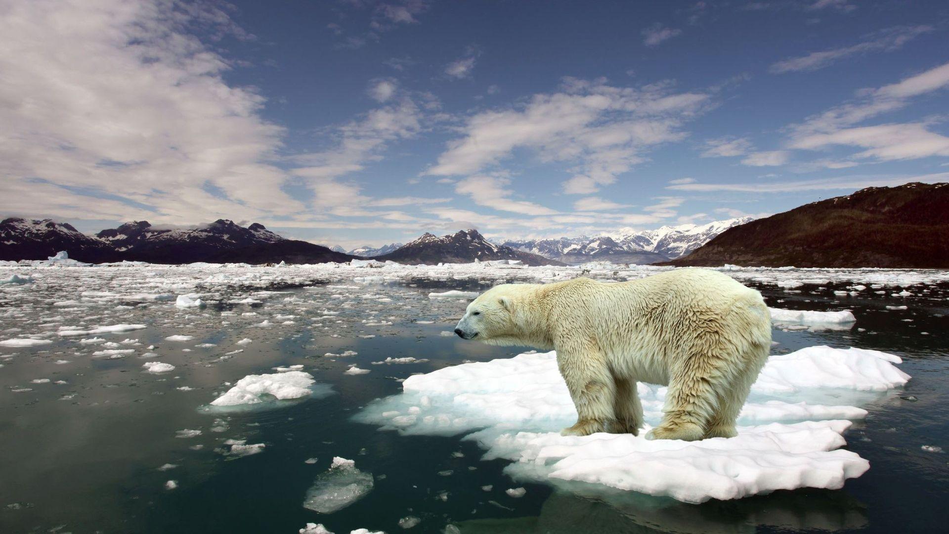 мужские картинки среда обитания белого медведя перьев филина