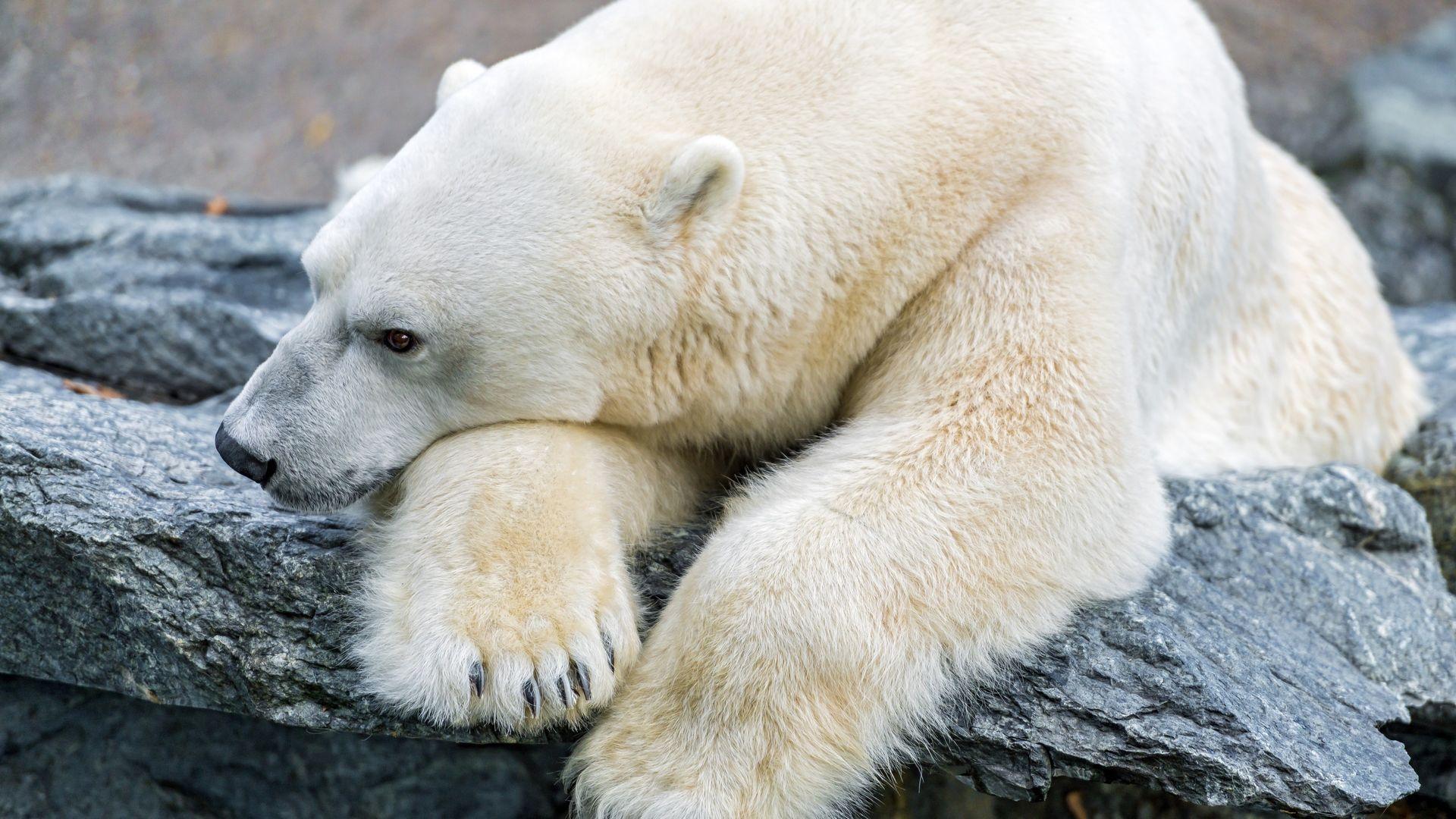 машина тоже смотреть картинки белого медведя день влюбленных