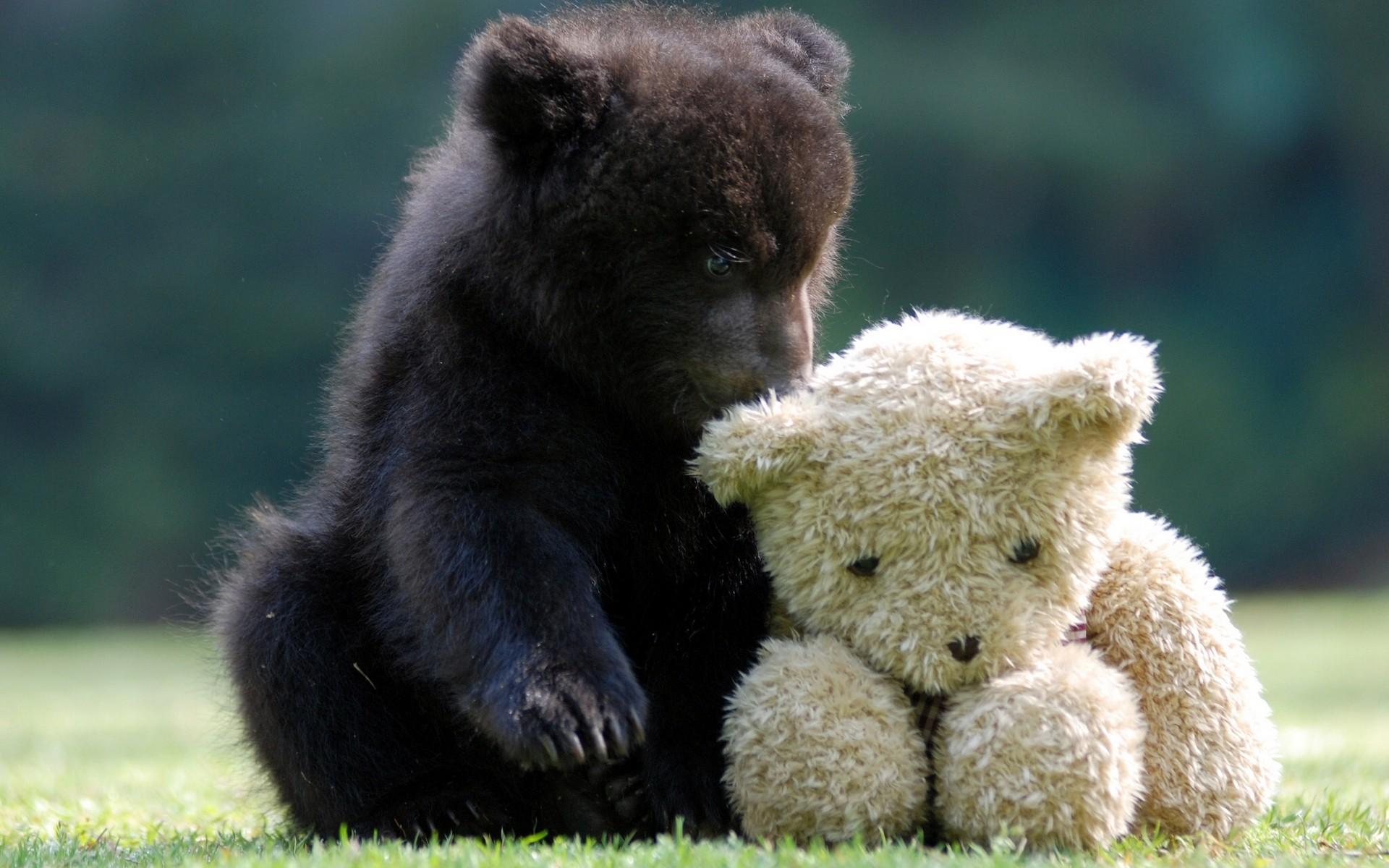 красивые медвежата картинки тут
