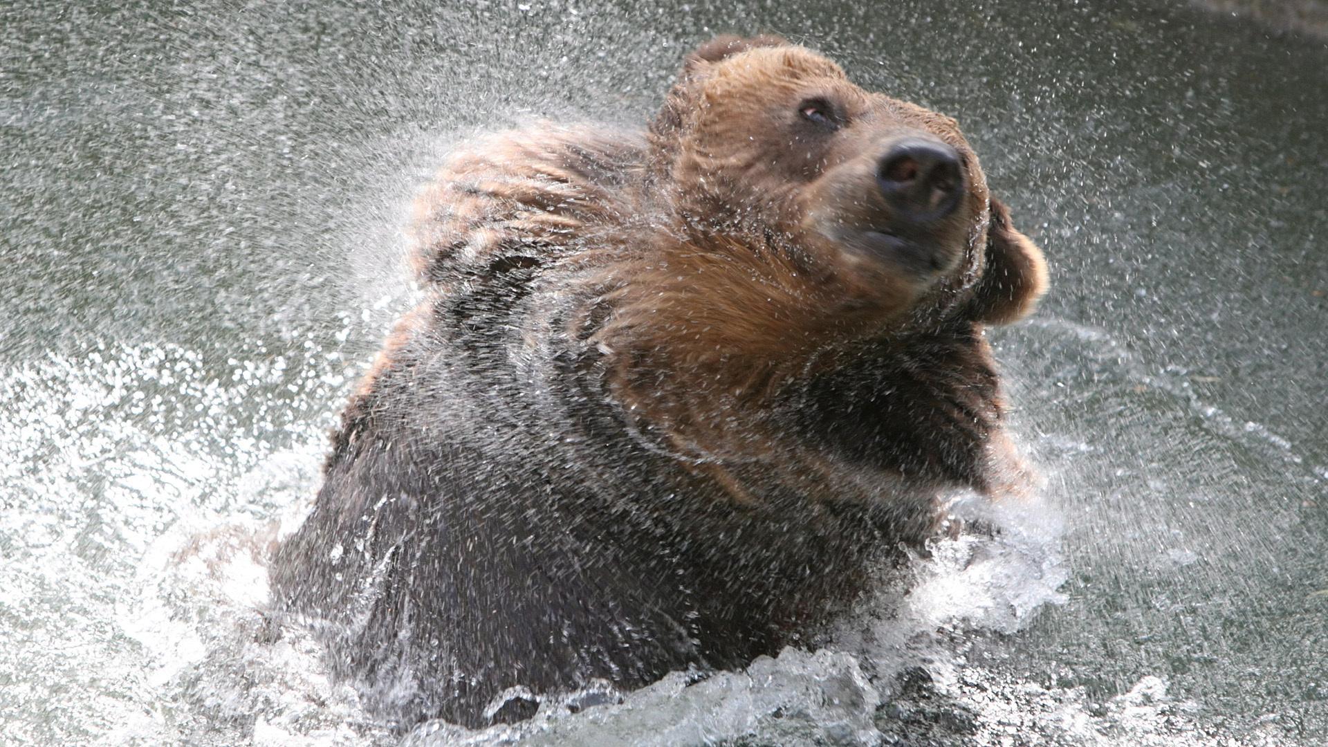 впервые картинки мокрый медведь отношения