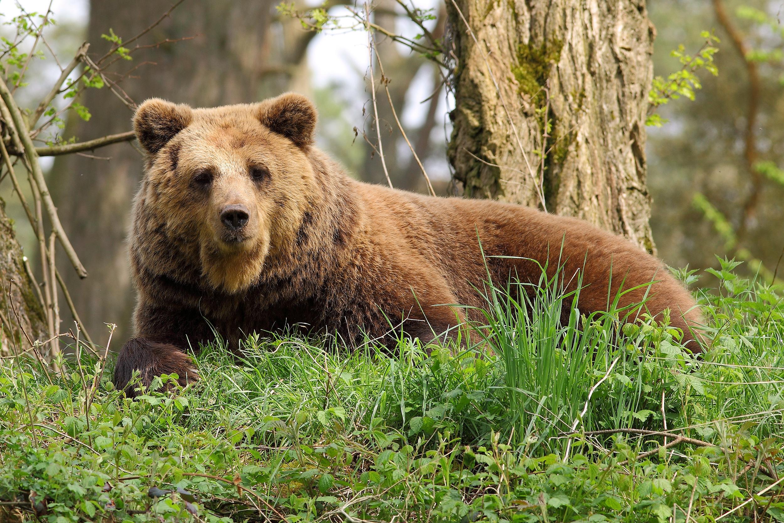 Картинка медведя красивые
