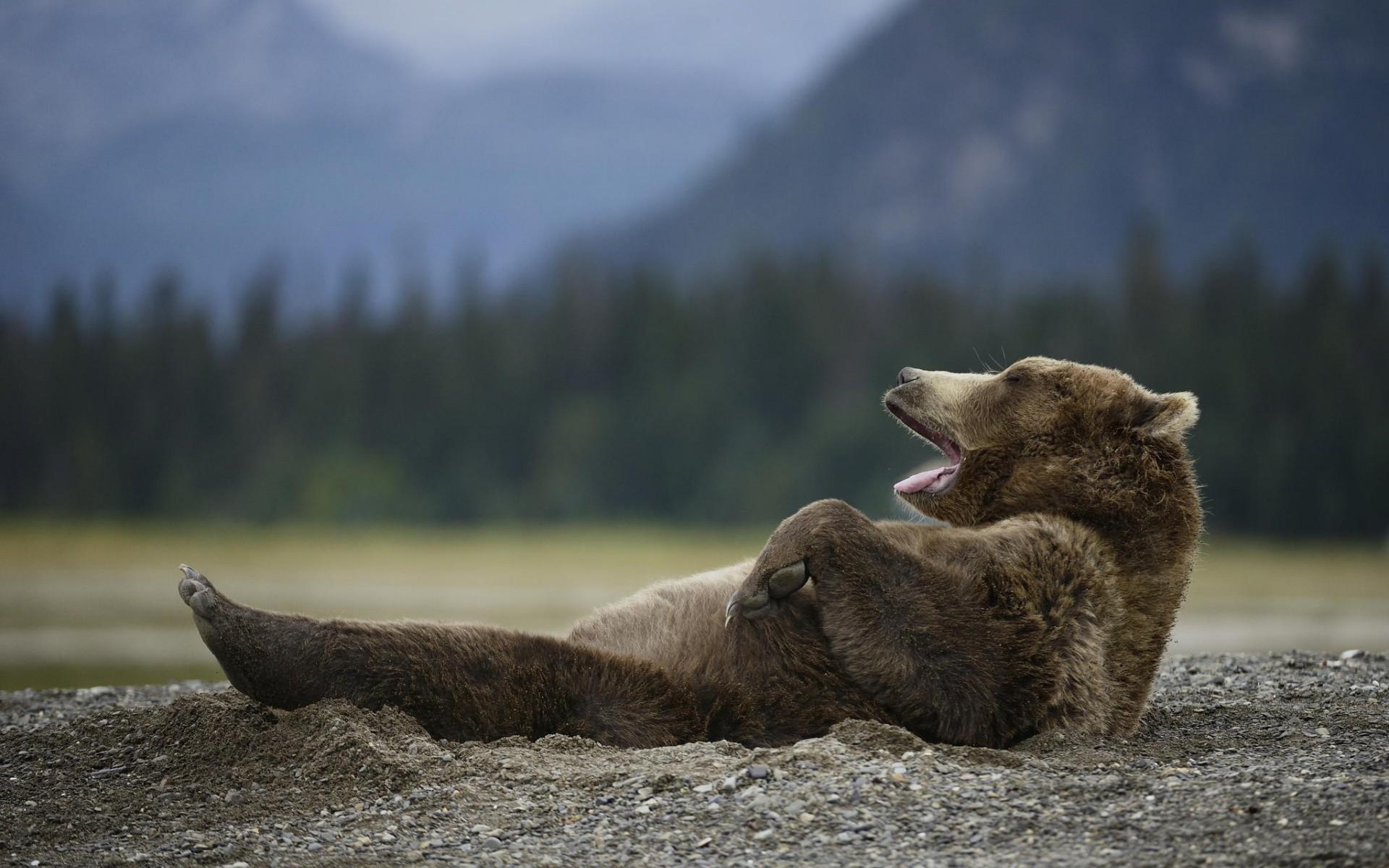Фото довольного медведя