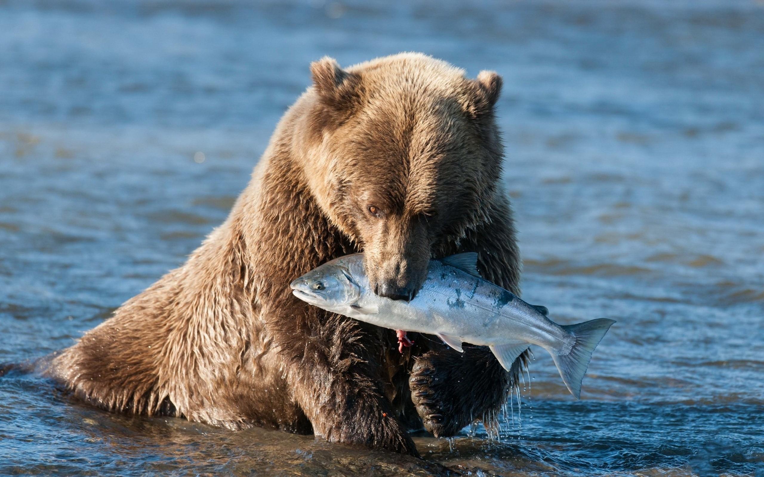 картинки разных медведей эконом-классе