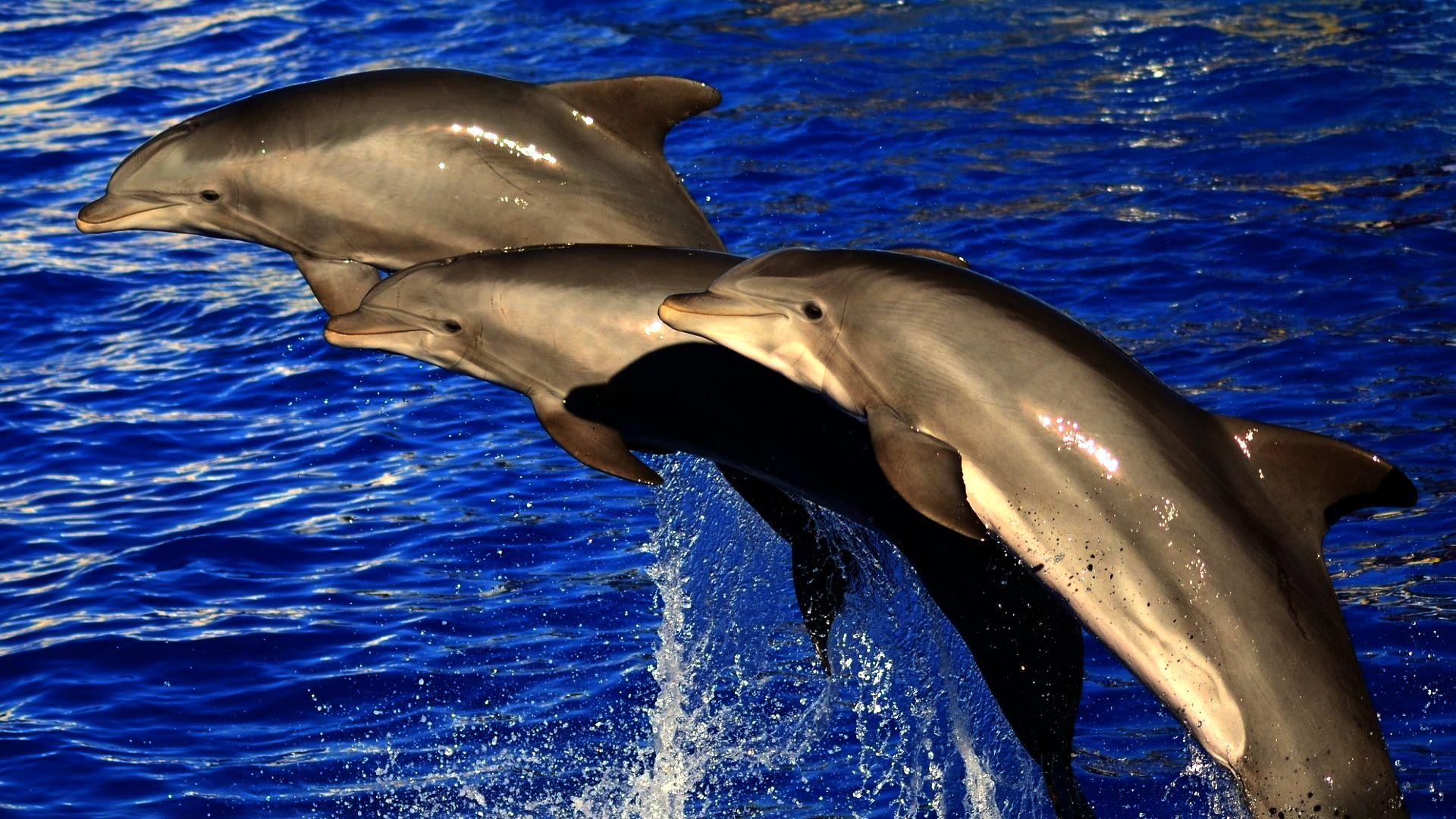 фотографии дельфинов в хорошем качестве аргентинский парень своему