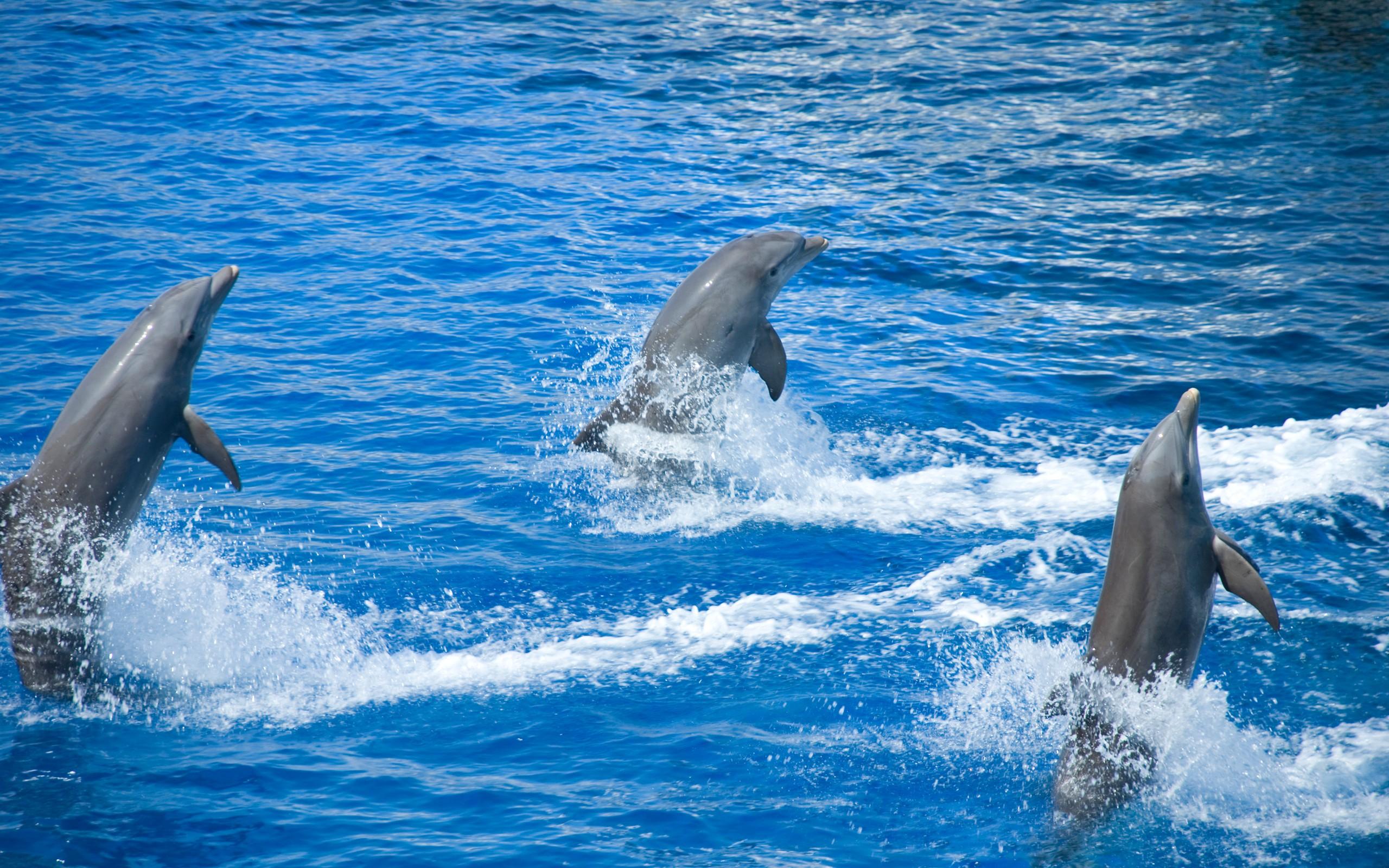 своего высококачественные фотографии дельфинов цепень это