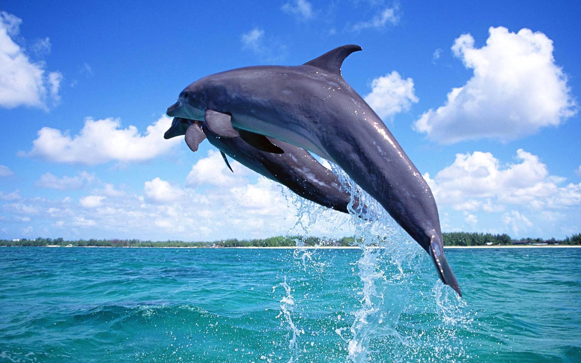 картинки для стола дельфины шоу