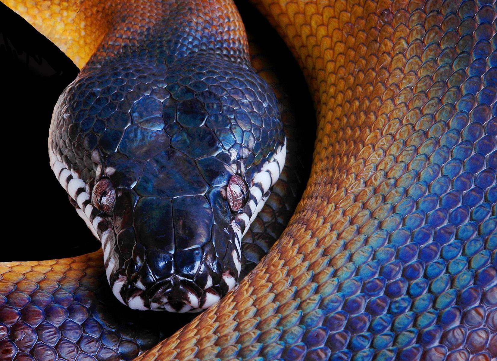 Змеи картинки для компании