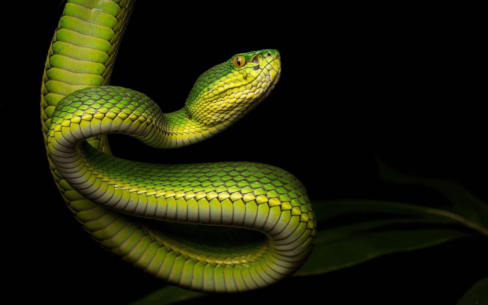 змеи в картинках для компа вкусная круглая гата