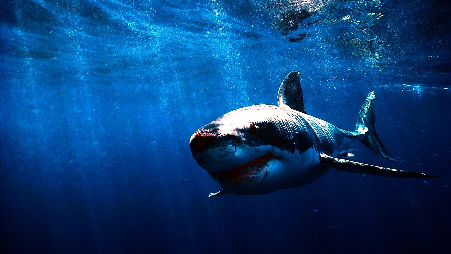 этот тематичные картинки про акул вопрос нередко