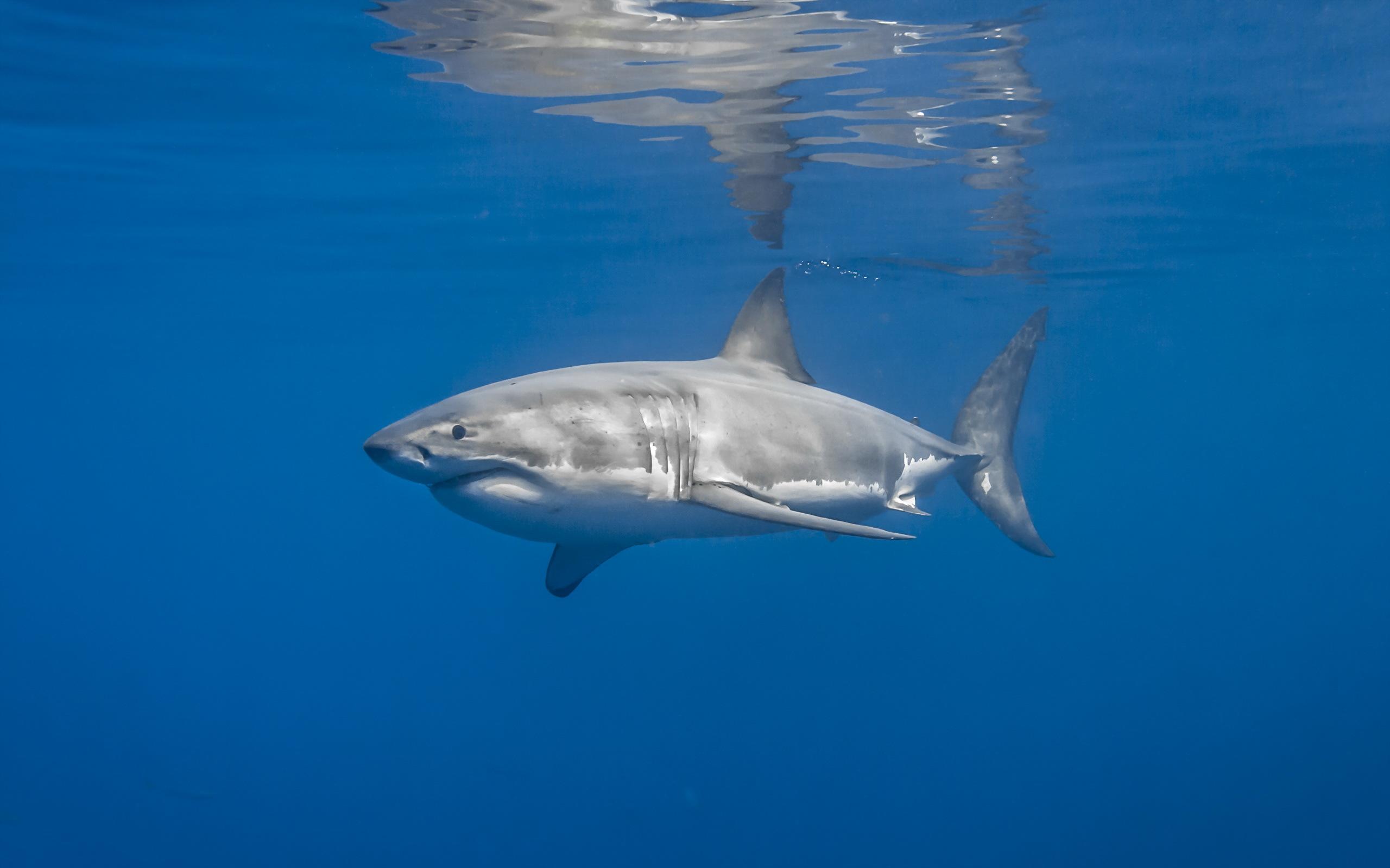 картинки обои для стен море акул выборе тротуарной