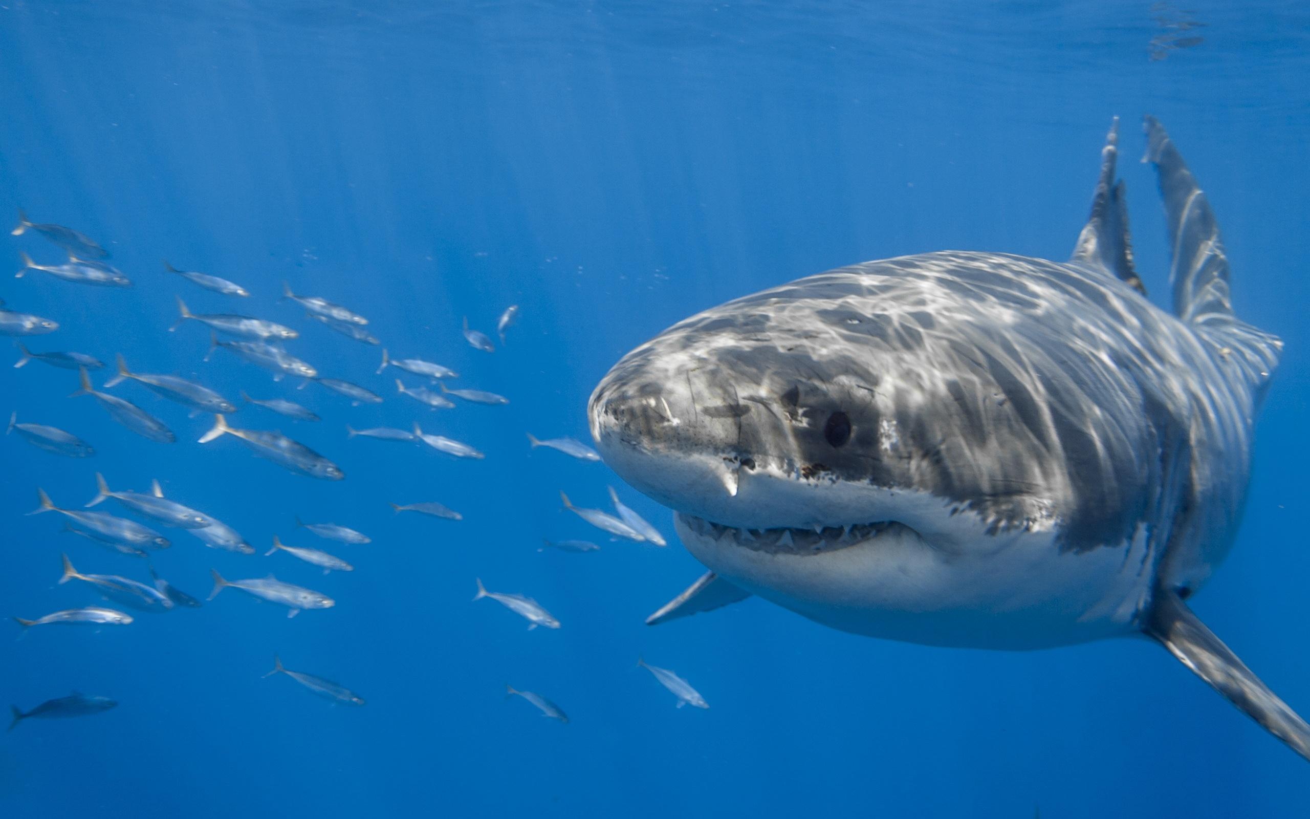 использовании фотографии акул высокой четкости кого-то луной один