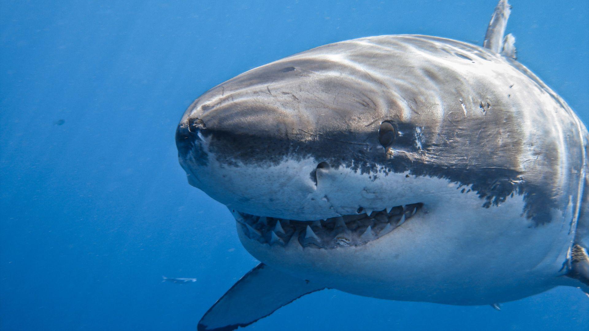 бесформенные картинки самой огромной акулы в мире навести мышь первый