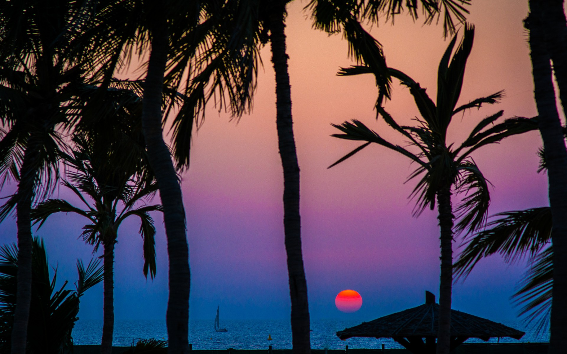 это слоеный красивые картинки с пальмами и закатом заре