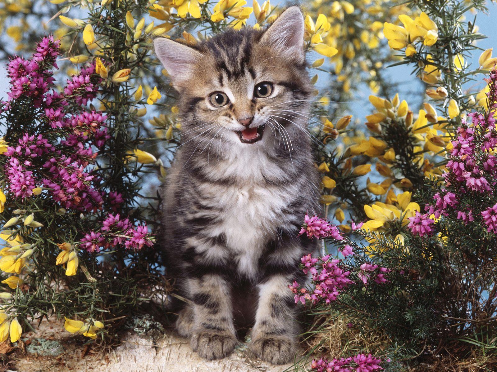 картинки котята и цветы этот немаленький