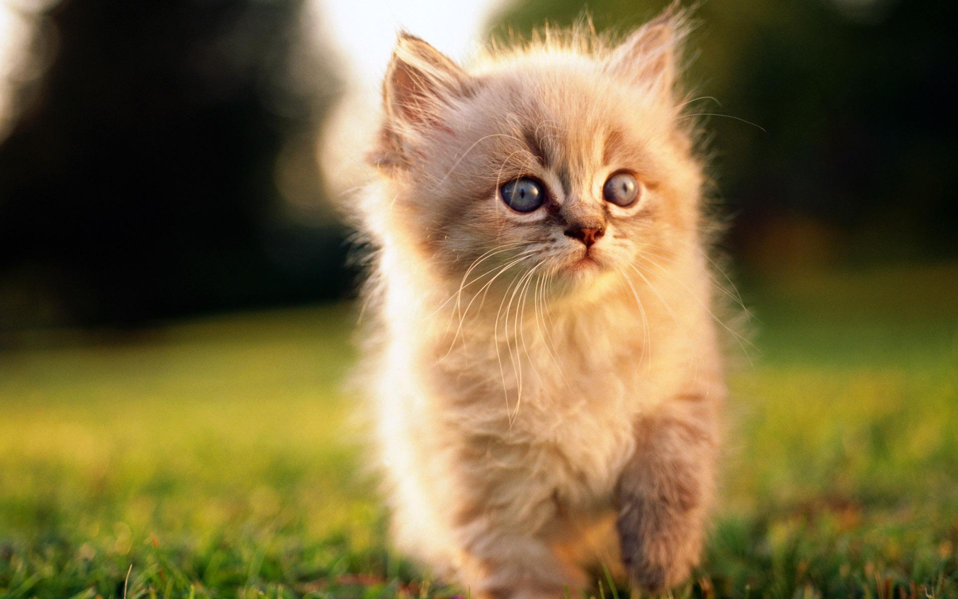 Красивые пушистые картинки котят
