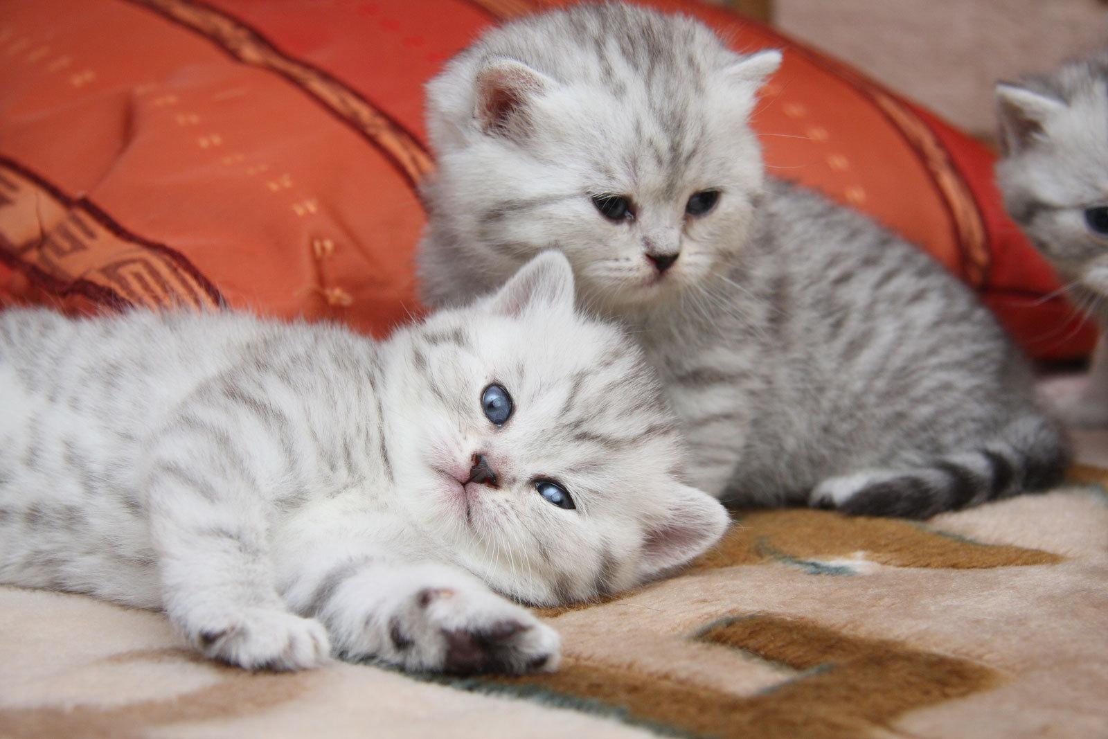 Смотреть красивые картинки с котятами