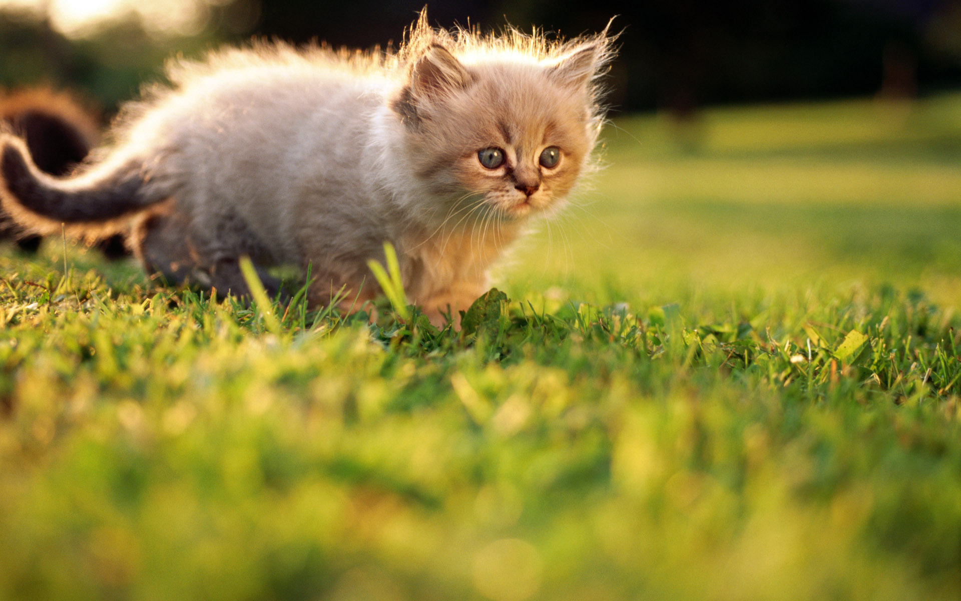 фотографии котят в очень высоком разрешении