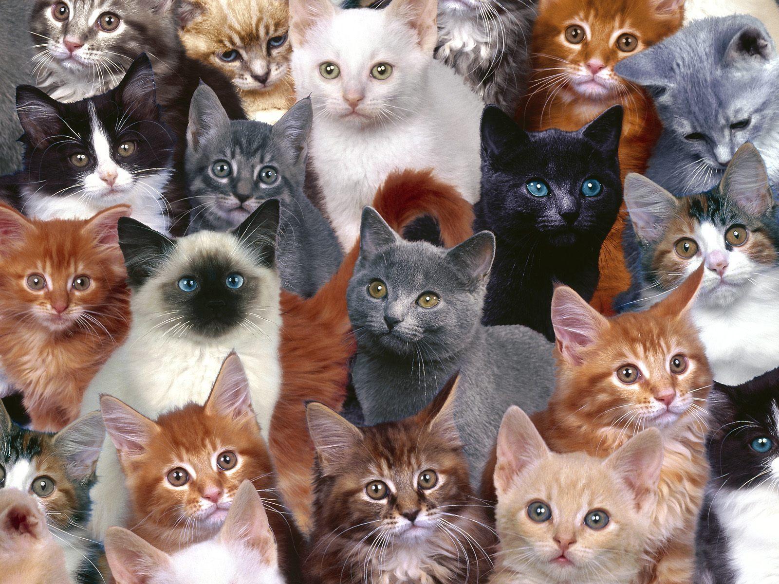много картинок в одной картинке с котятами всяких сомнений самой