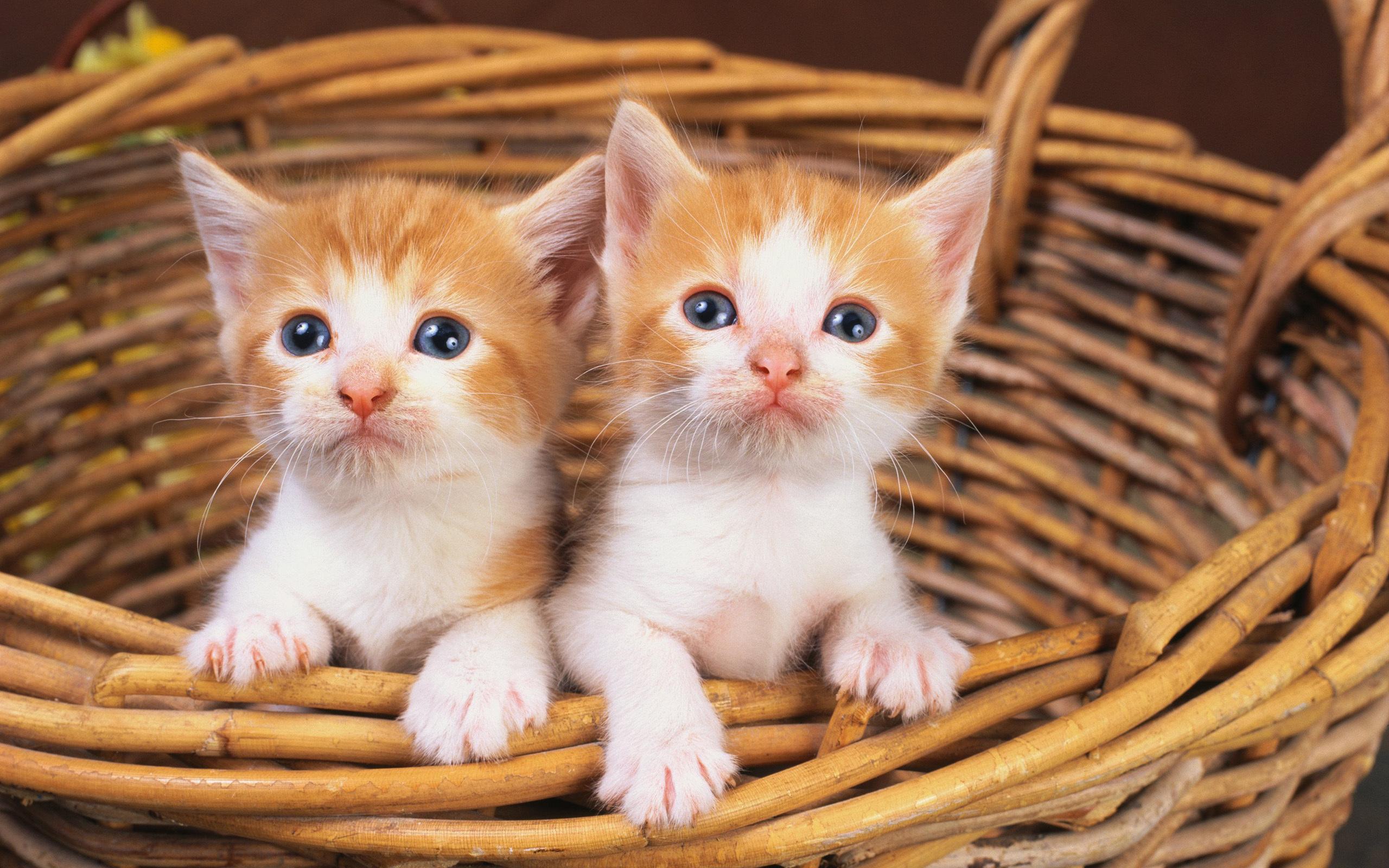 Котики фотки котики фотки