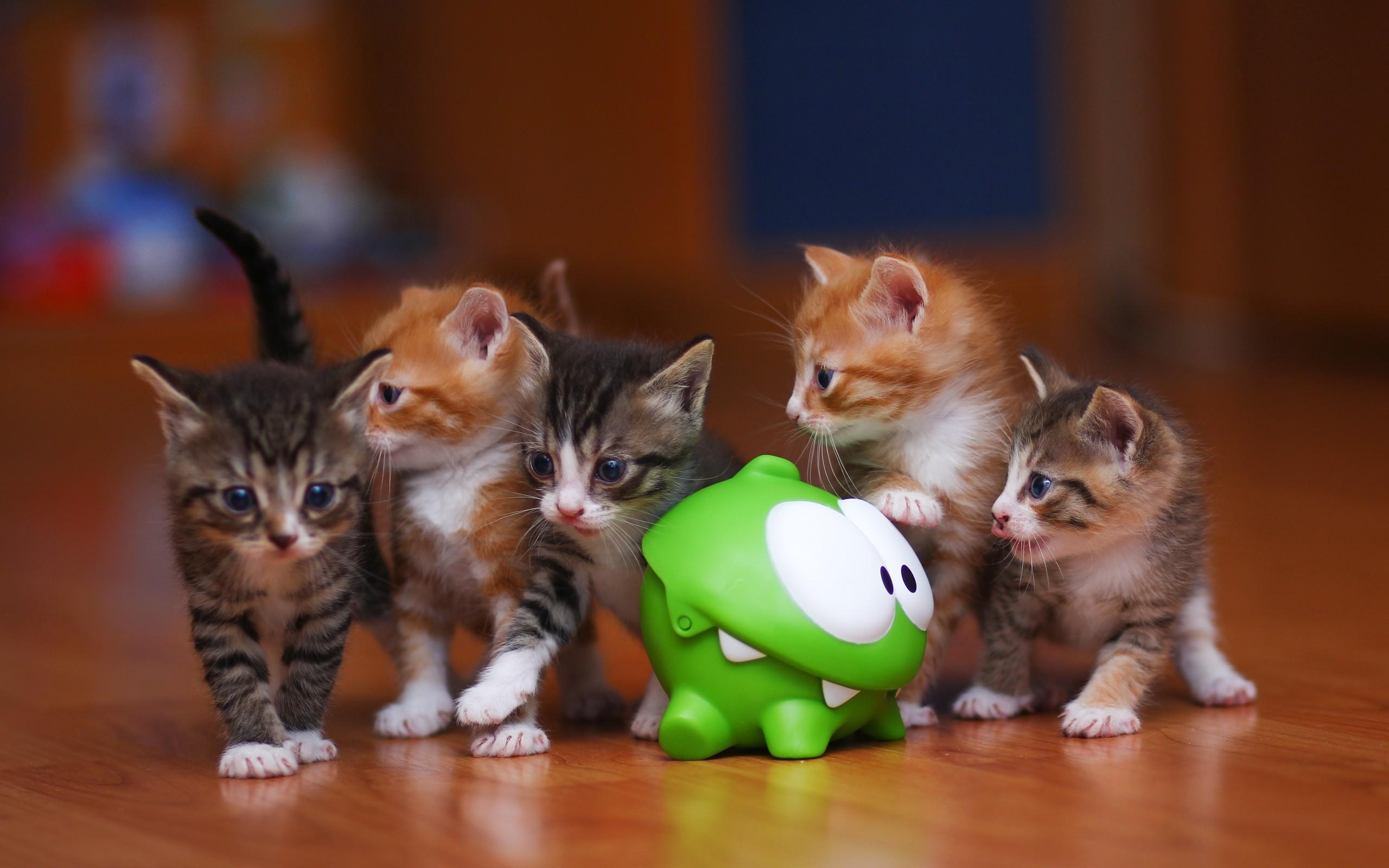 картинки большие с котенком популярных