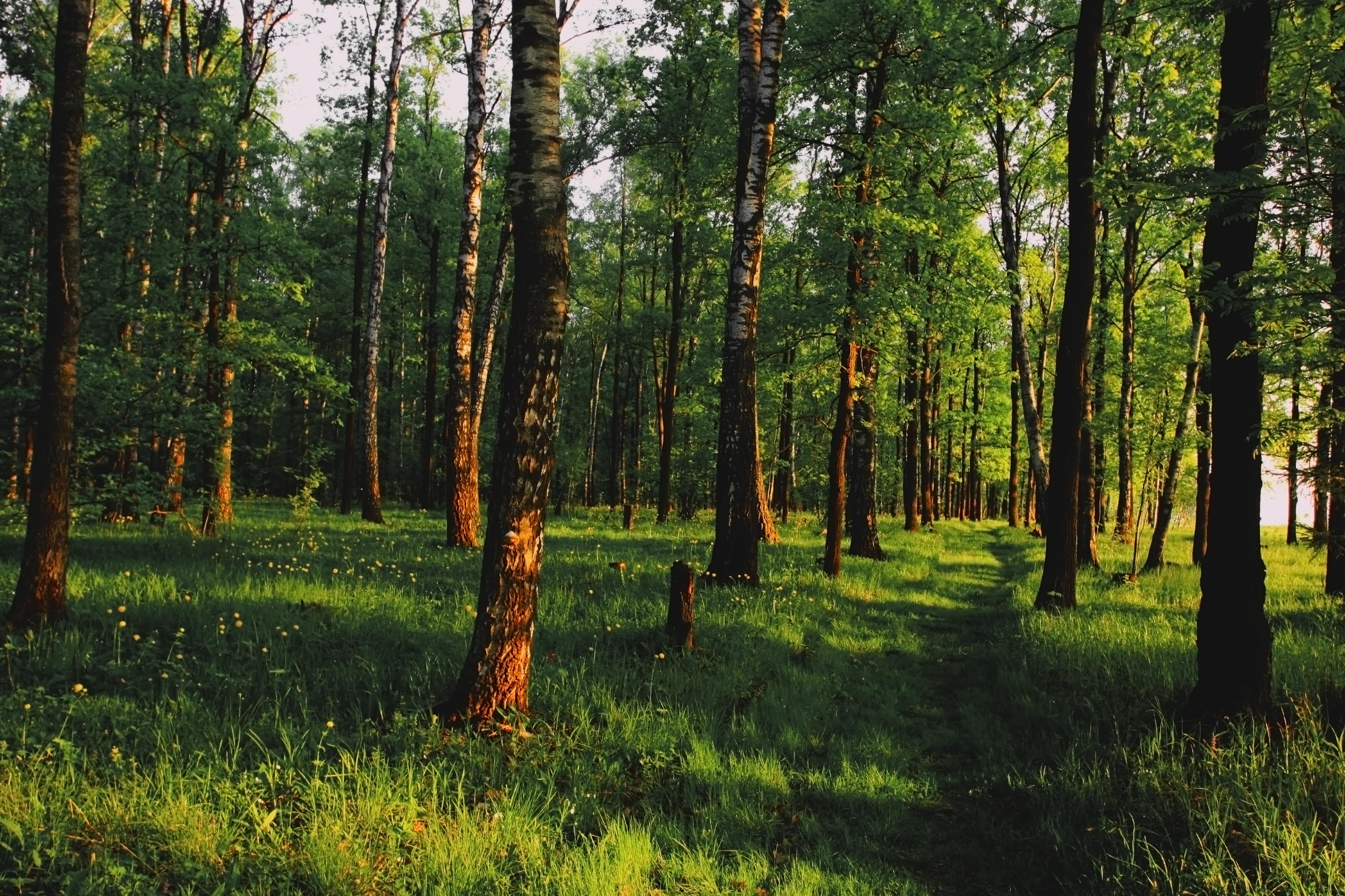 российский лес картинка директор открытого