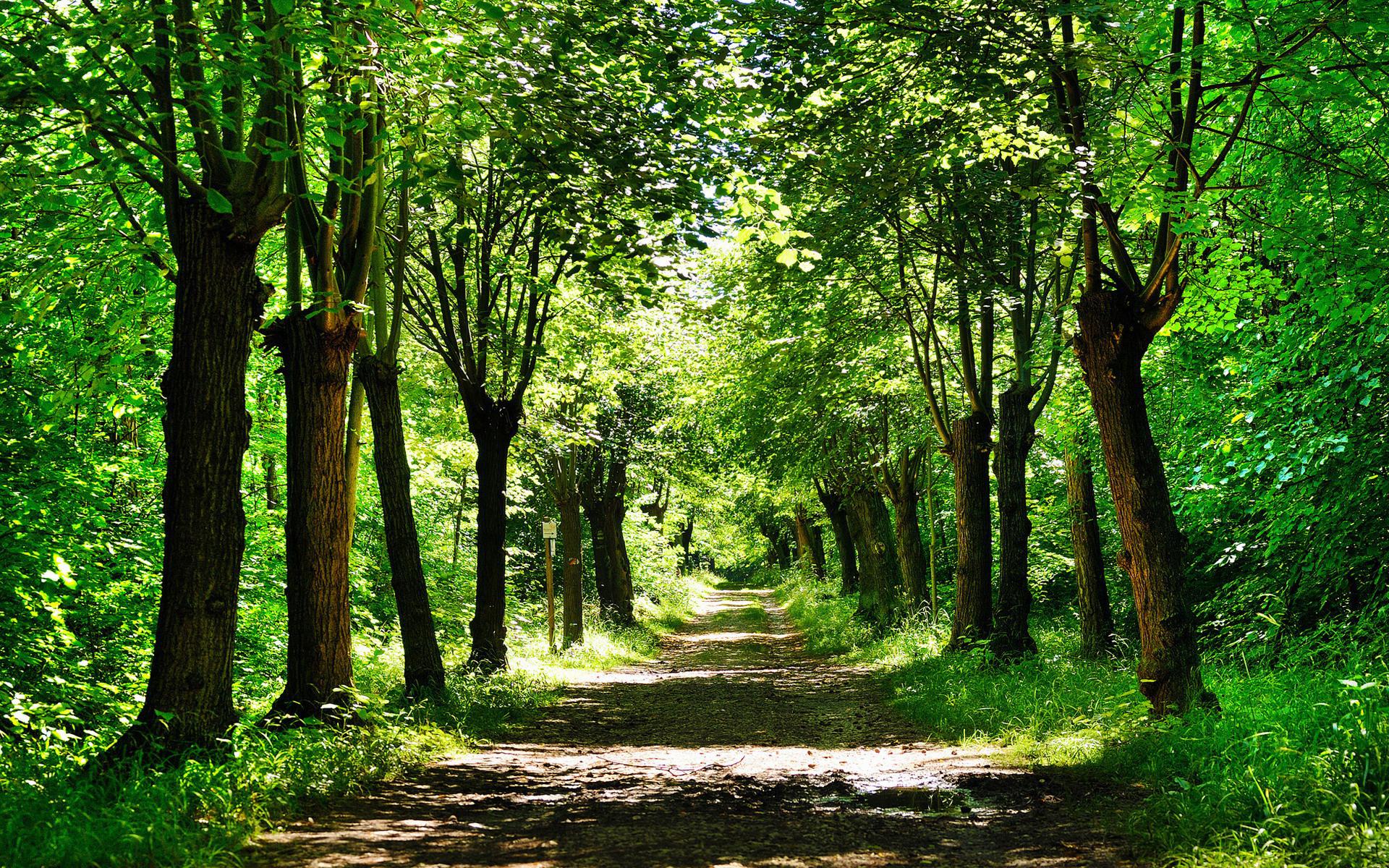 округлившимся картинки лесной аллеи протяжении