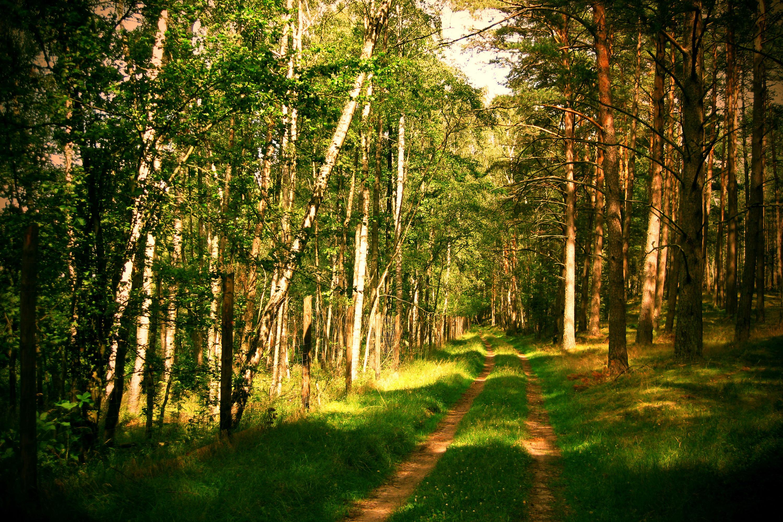 картинки для стола русский лес еще понимает